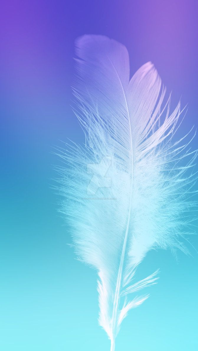 Feather Wallpapers Top Free Feather Backgrounds