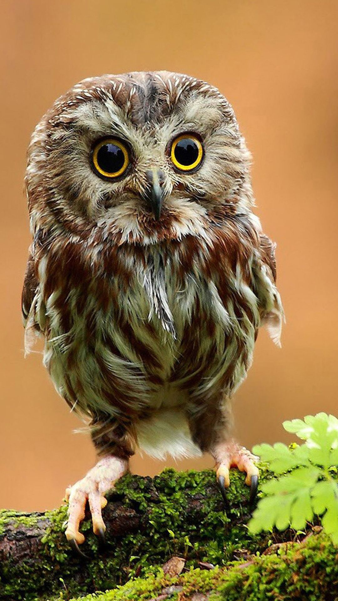 Owl iPhone Wallpapers - Top Free Owl iPhone Backgrounds ...