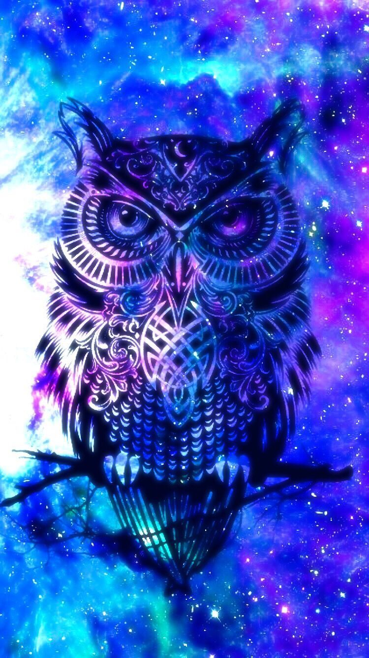 Cool Owl Wallpapers Top Free Cool Owl Backgrounds