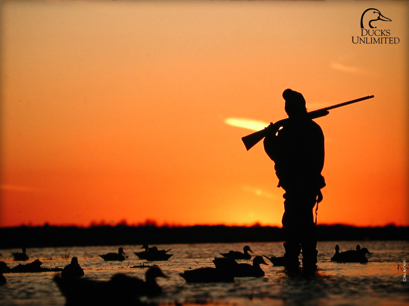 55 Best Free Duck Hunting Wallpapers Wallpaperaccess