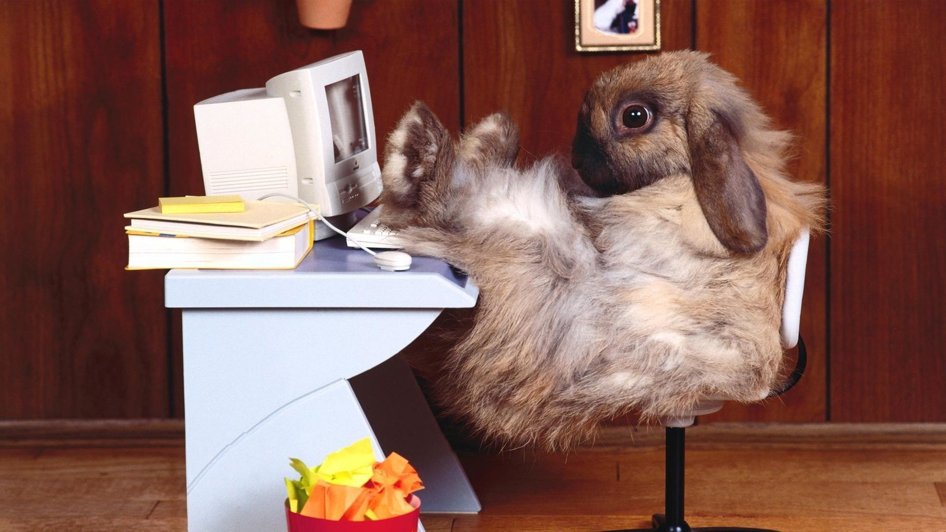 Funny Bunny Wallpapers Top Free Funny Bunny Backgrounds