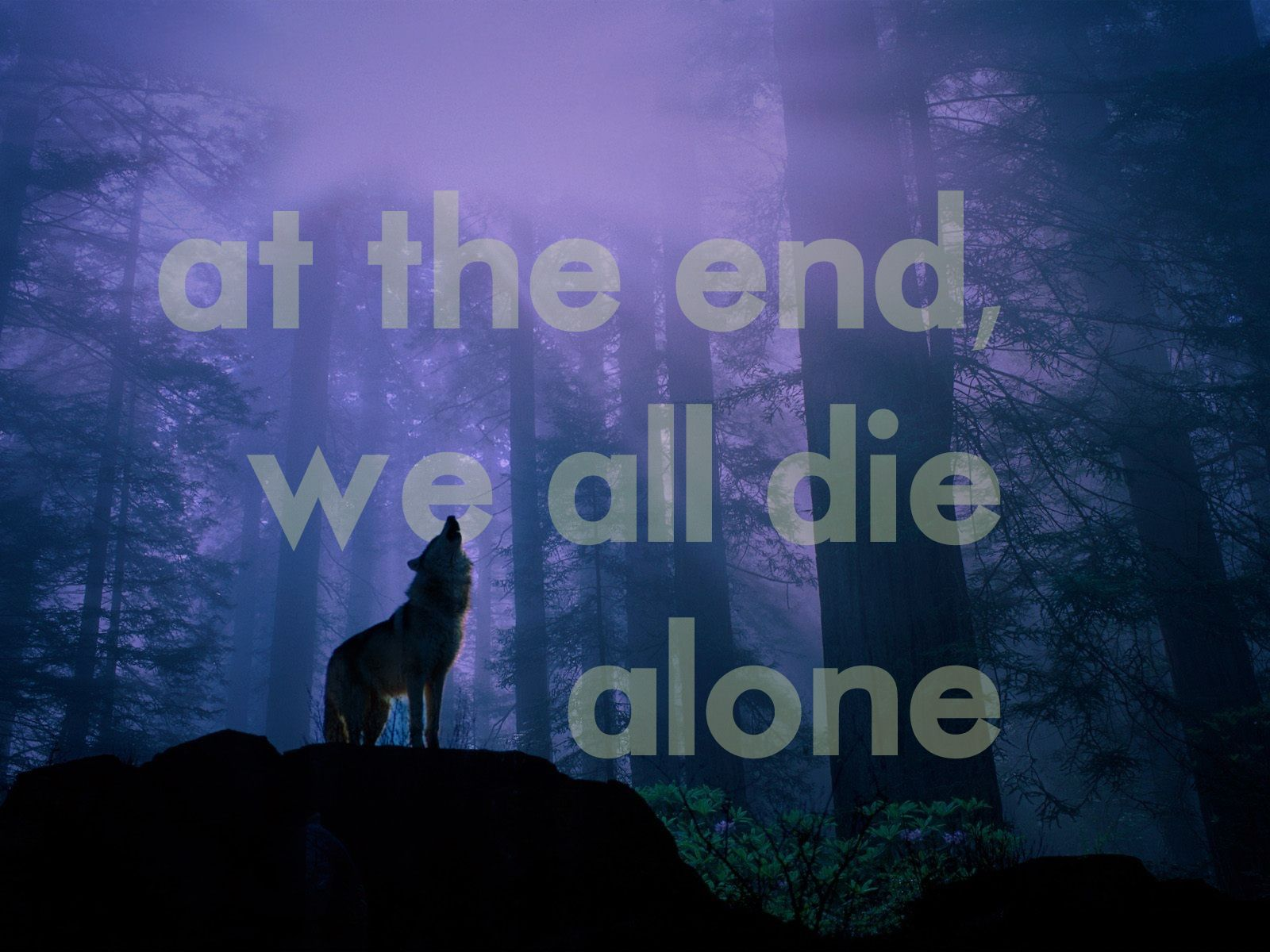 50 Best Free Lone Wolf Wallpapers Wallpaperaccess