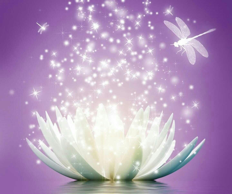 Free Ppt Backgrounds Desktop Wallpaper Flower Pink Lotus: Top Free Zen Lotus Backgrounds