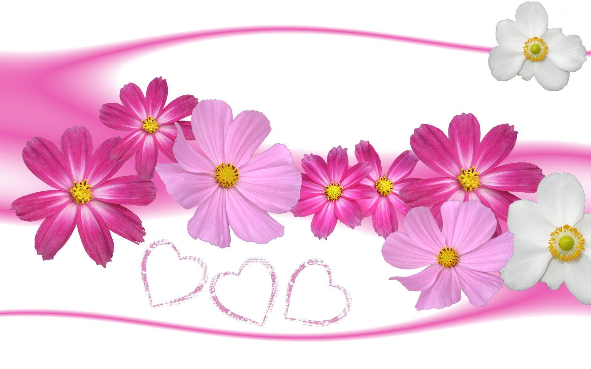 Hình nền hoa đẹp 1920x1200