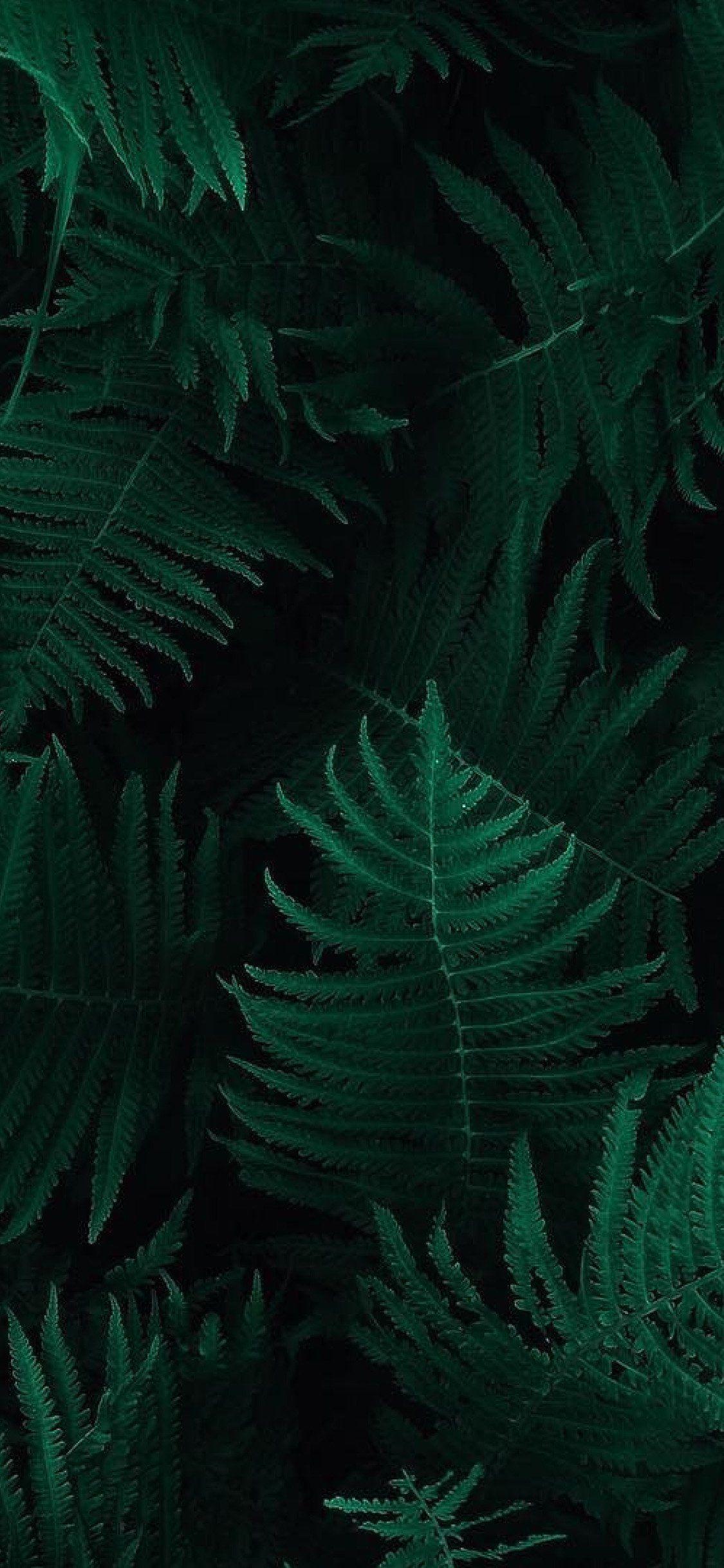 Dark Green Iphone Wallpapers Top Free Dark Green Iphone Backgrounds Wallpaperaccess
