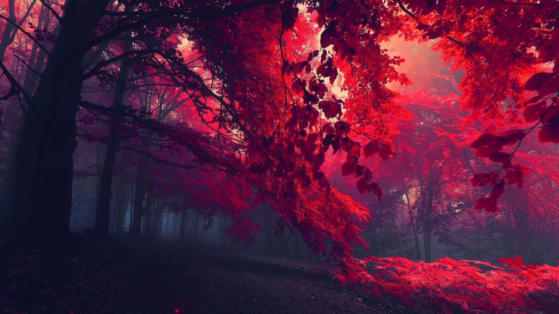 Red Autumn Wallpapers Top Free Red Autumn Backgrounds Wallpaperaccess