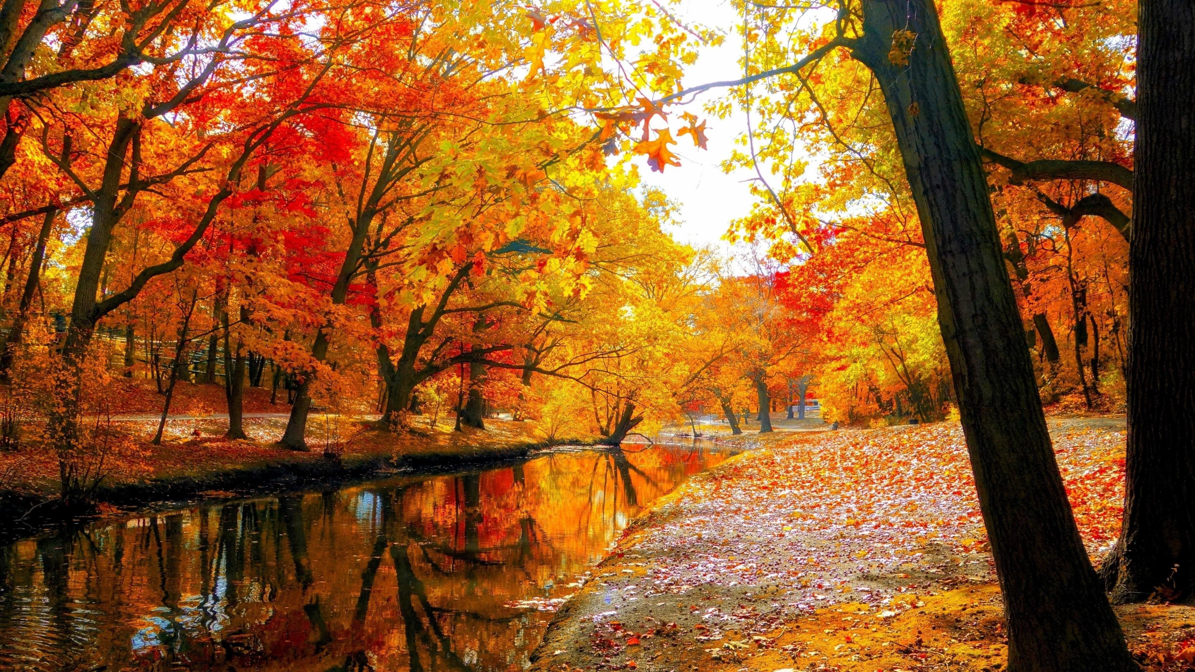 Autumn Trees Wallpapers Top Free Autumn Trees Backgrounds Wallpaperaccess
