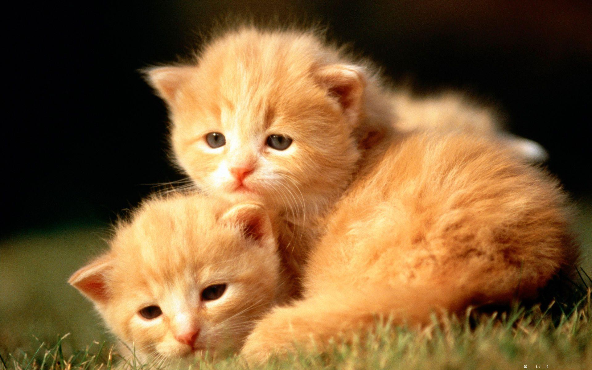 Baby Animal Wallpapers Top Free Baby Animal Backgrounds
