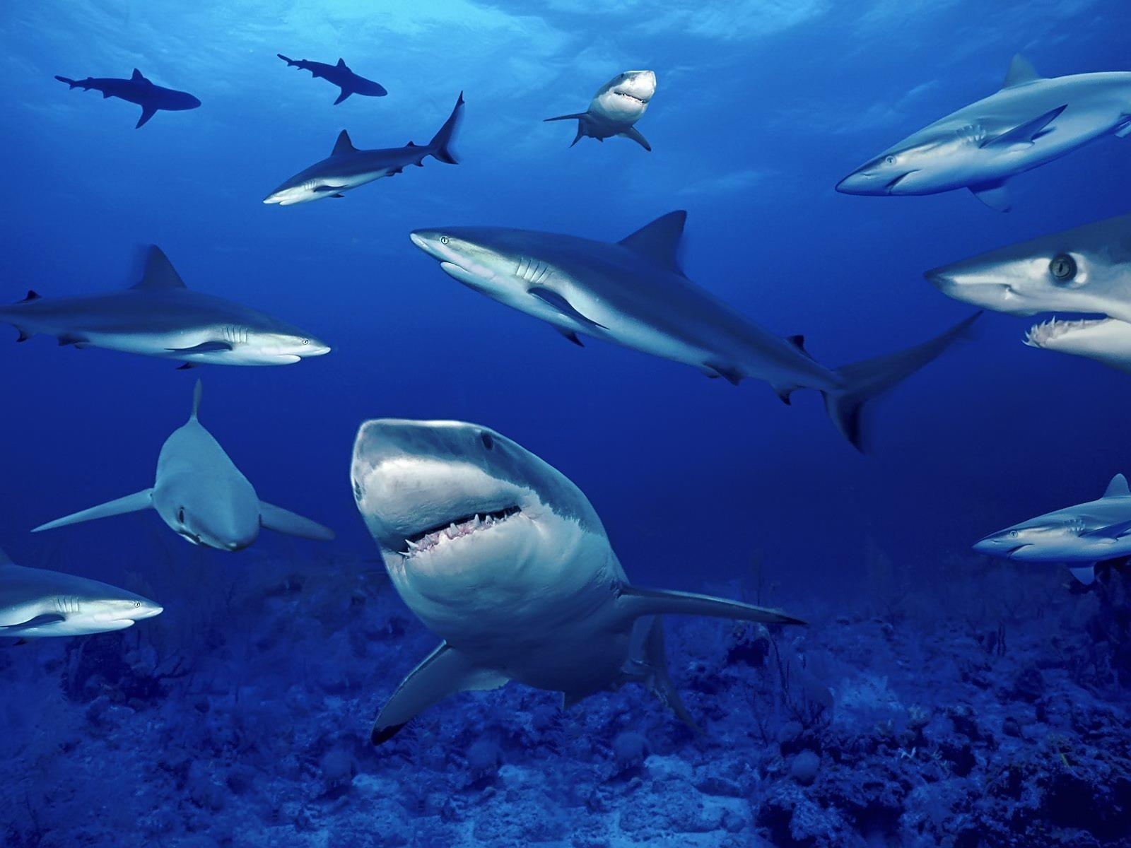 Marine Life Wallpapers Top Free Marine Life Backgrounds