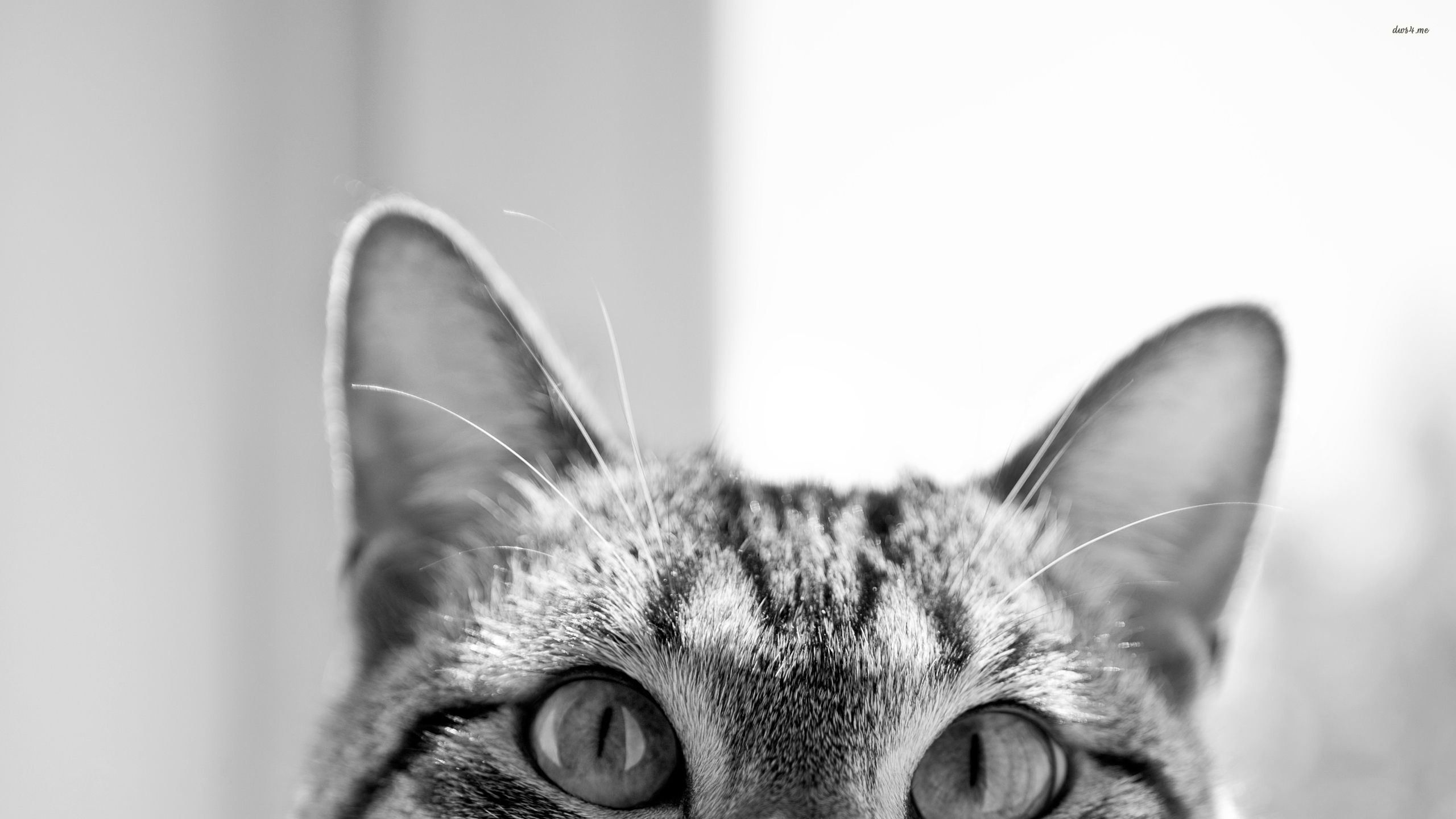 Hipster Cat Wallpapers , Top Free Hipster Cat Backgrounds