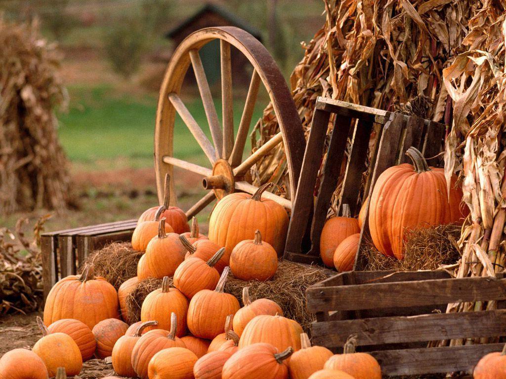 Fall Pumpkin Wallpapers Top Free Fall Pumpkin Backgrounds Wallpaperaccess