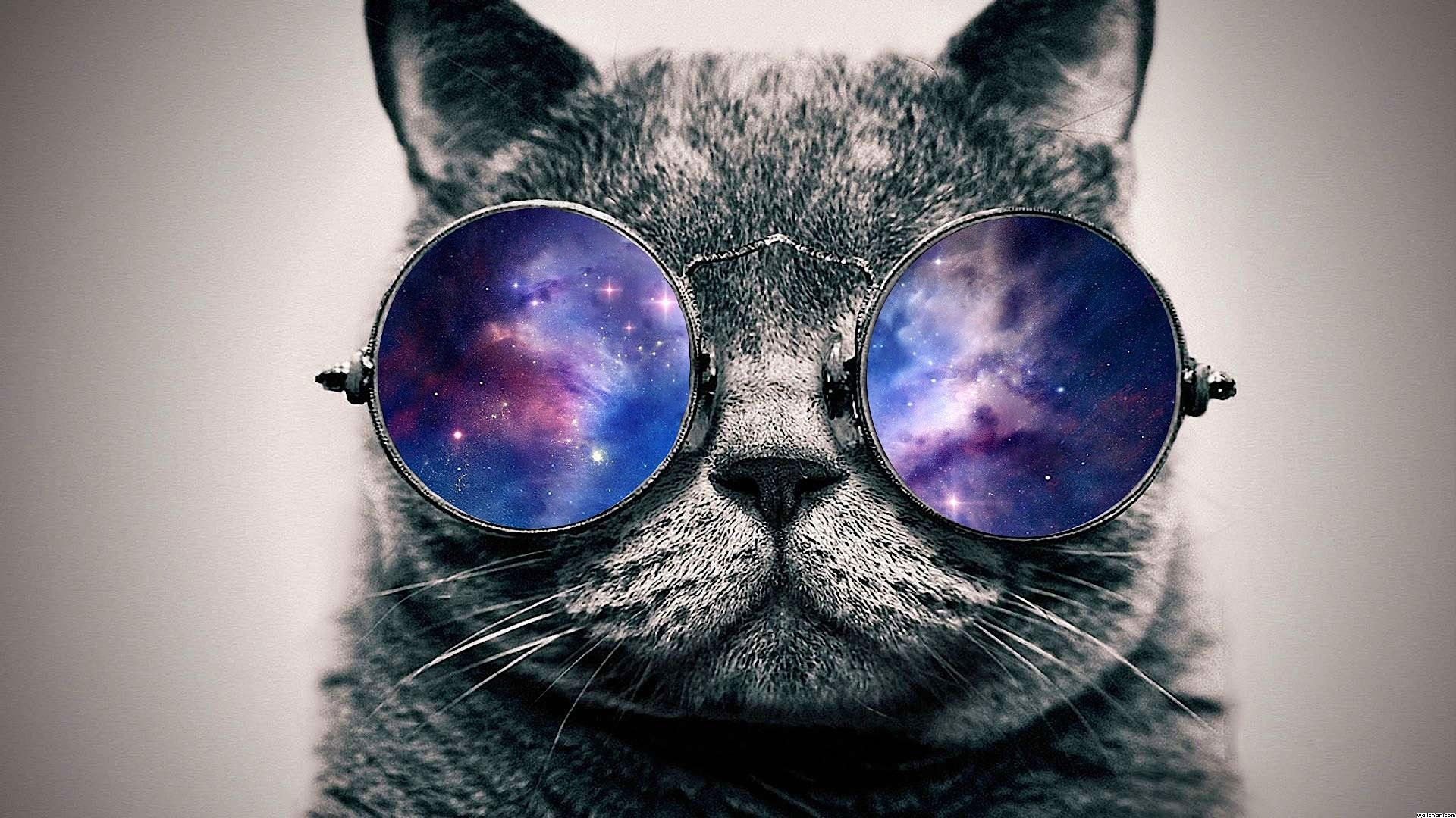 Galaxy cat hipster