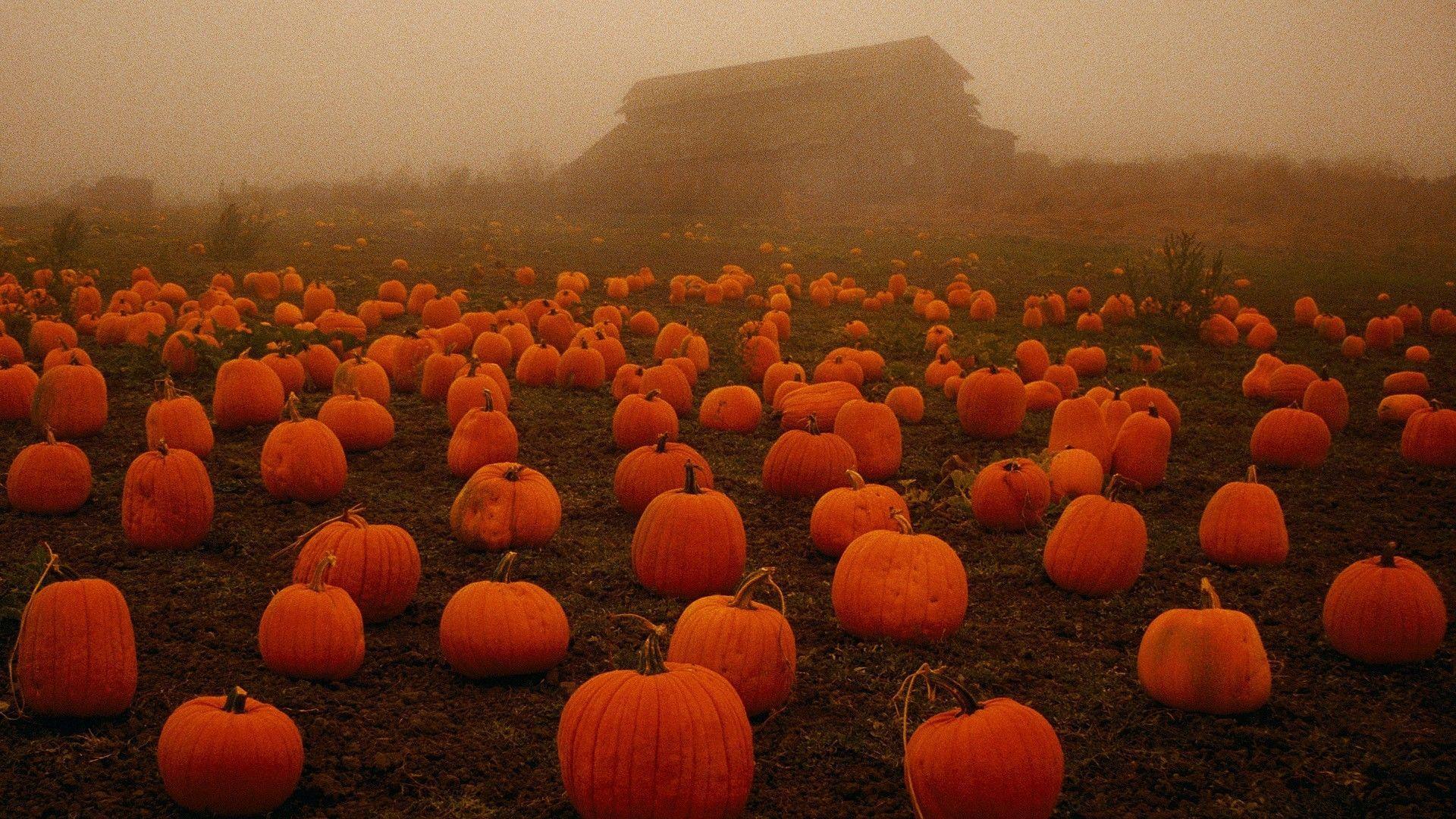 Fall pumpkin wallpapers top free fall pumpkin backgrounds wallpaperaccess - Fall wallpaper pumpkins ...