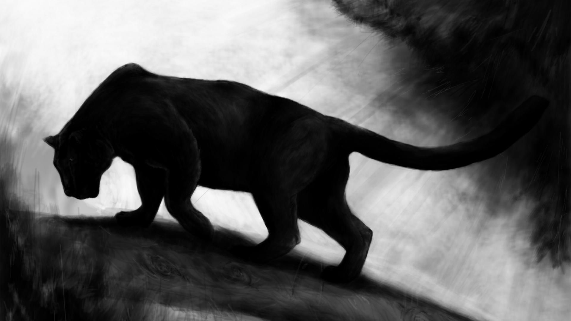 43 Best Free Black Panther Animal Wallpapers Wallpaperaccess