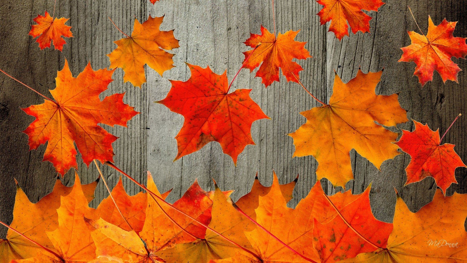 Fall Desktop Wallpapers Top Free Fall Desktop Backgrounds