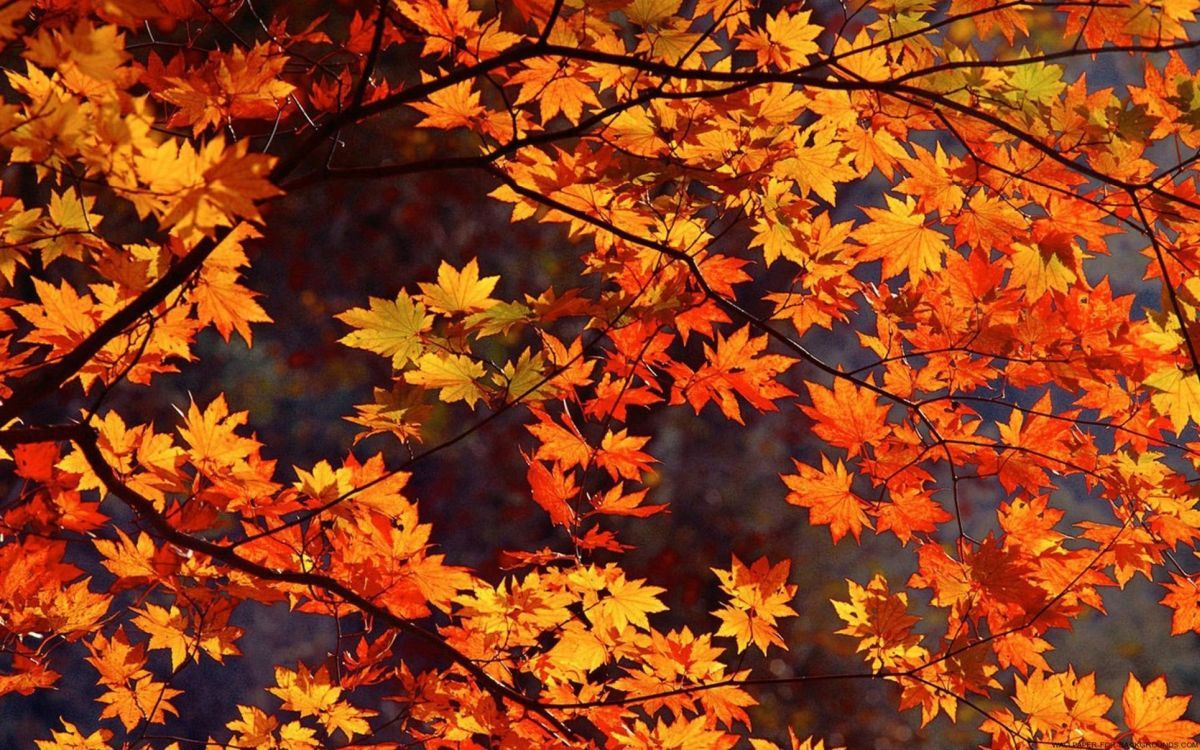 Fall Aesthetic Wallpapers Top Free Fall Aesthetic Backgrounds Wallpaperaccess