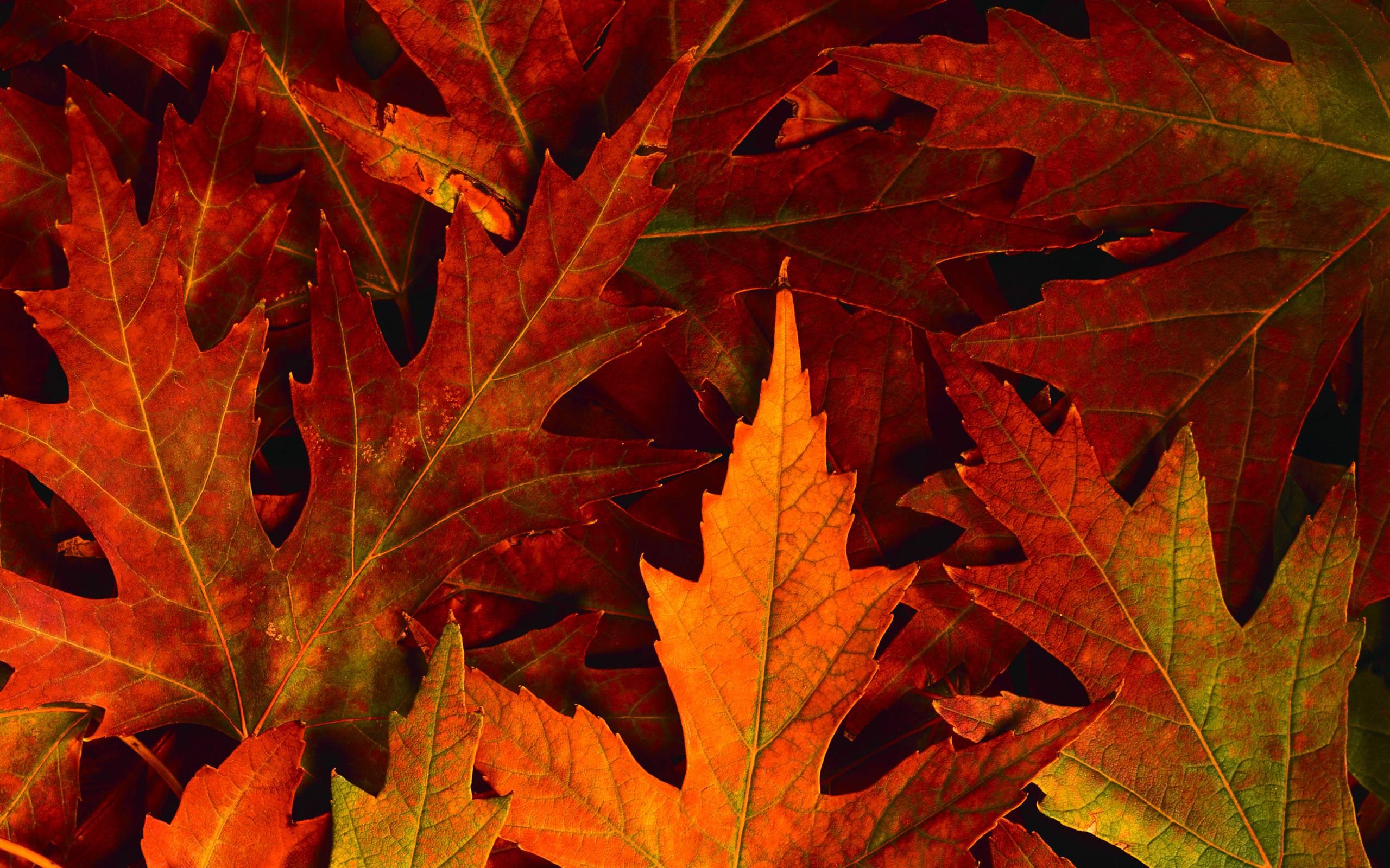 Autumn Scenes Desktop Wallpapers Top Free Autumn Scenes