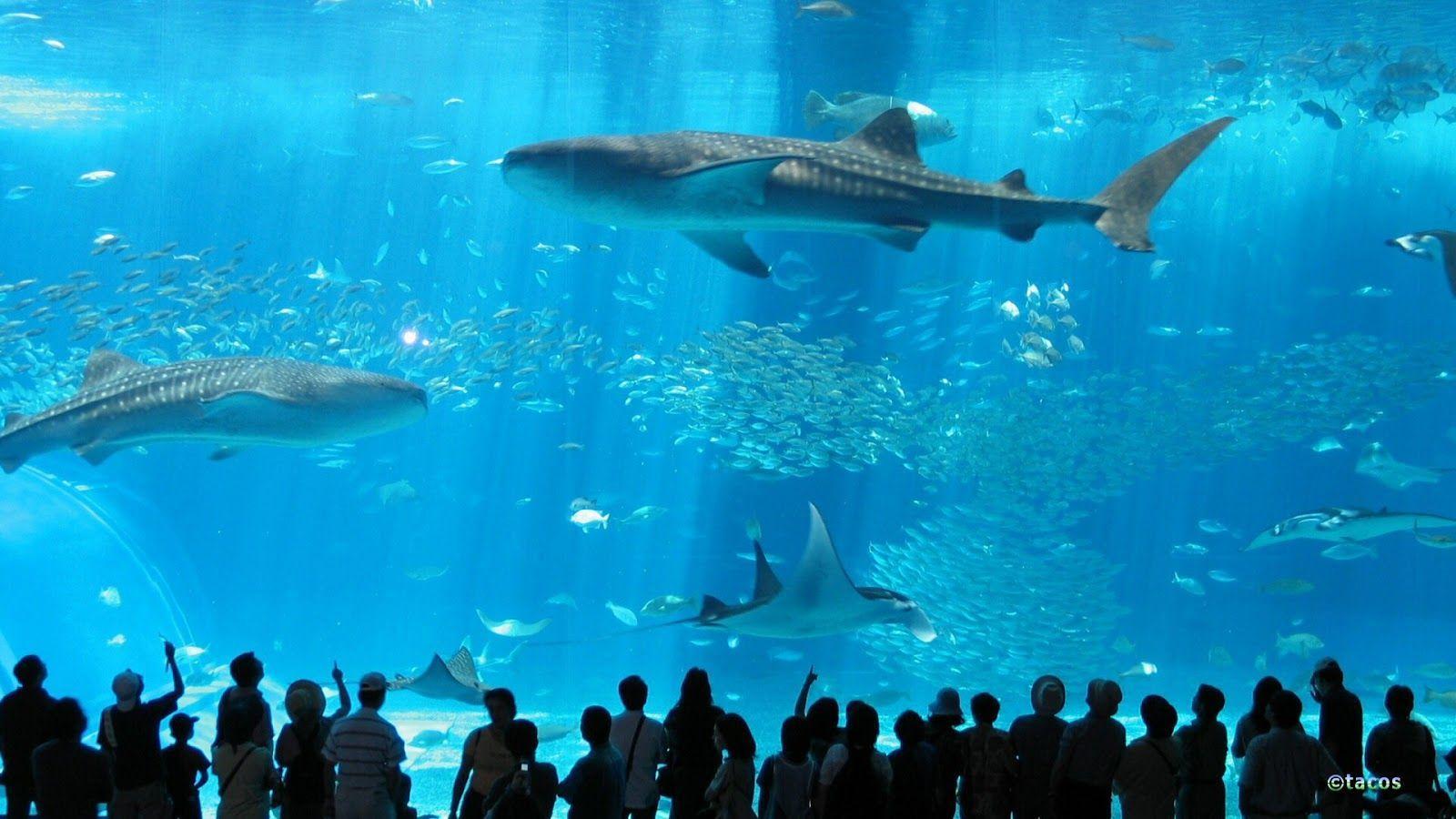 Japanese Aquarium Wallpapers Top Free Japanese Aquarium Backgrounds Wallpaperaccess