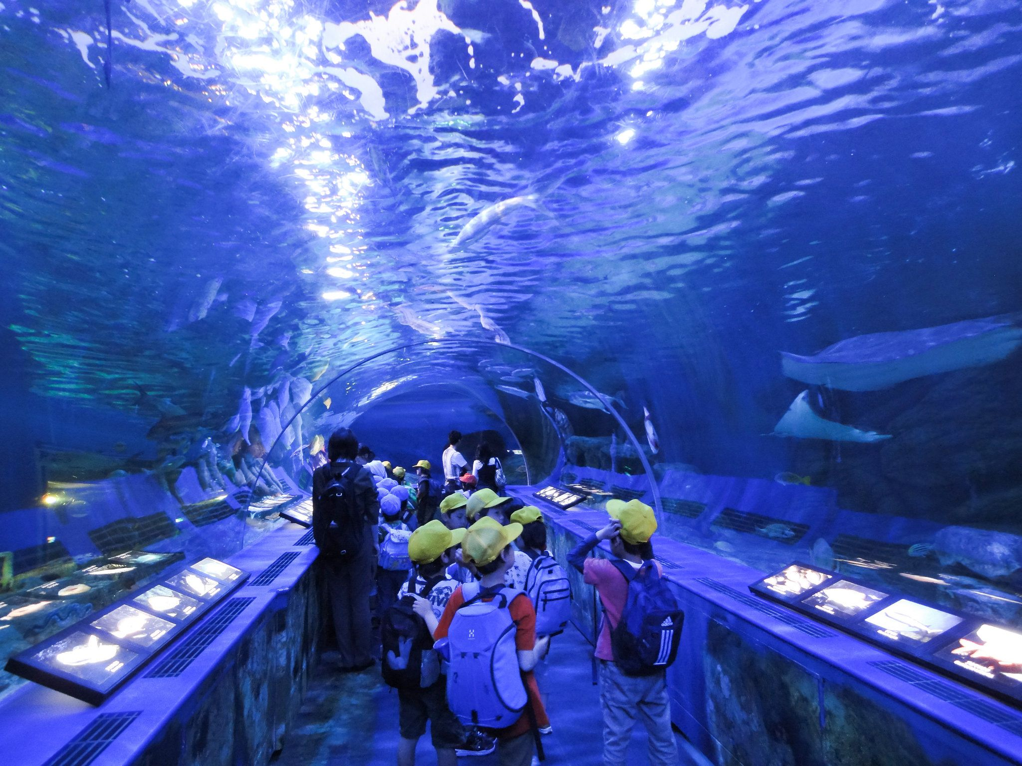 Japanese Aquarium Wallpapers - Top Free Japanese Aquarium ...