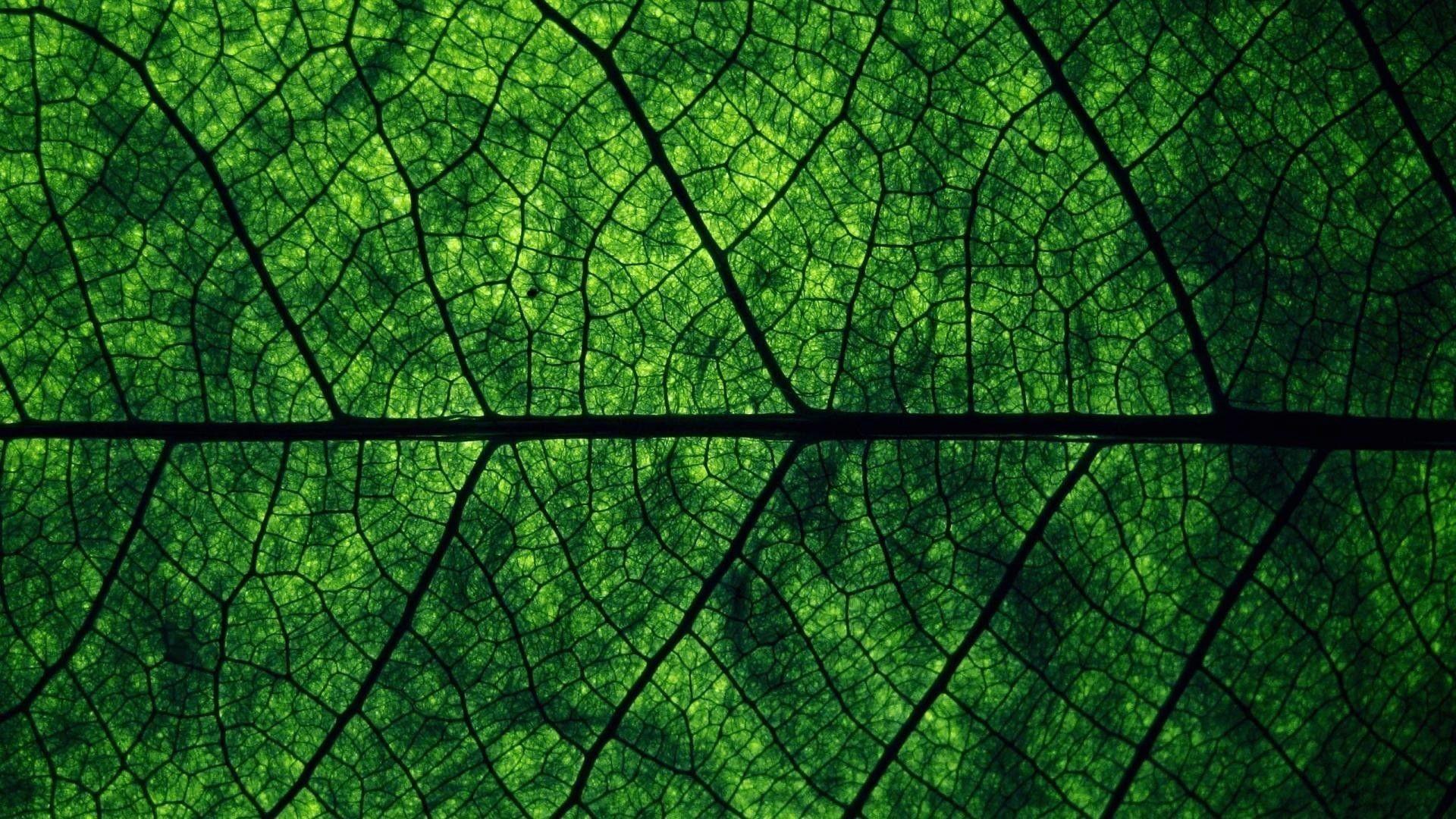 Green Aesthetic Desktop Wallpapers - Top Free Green ...