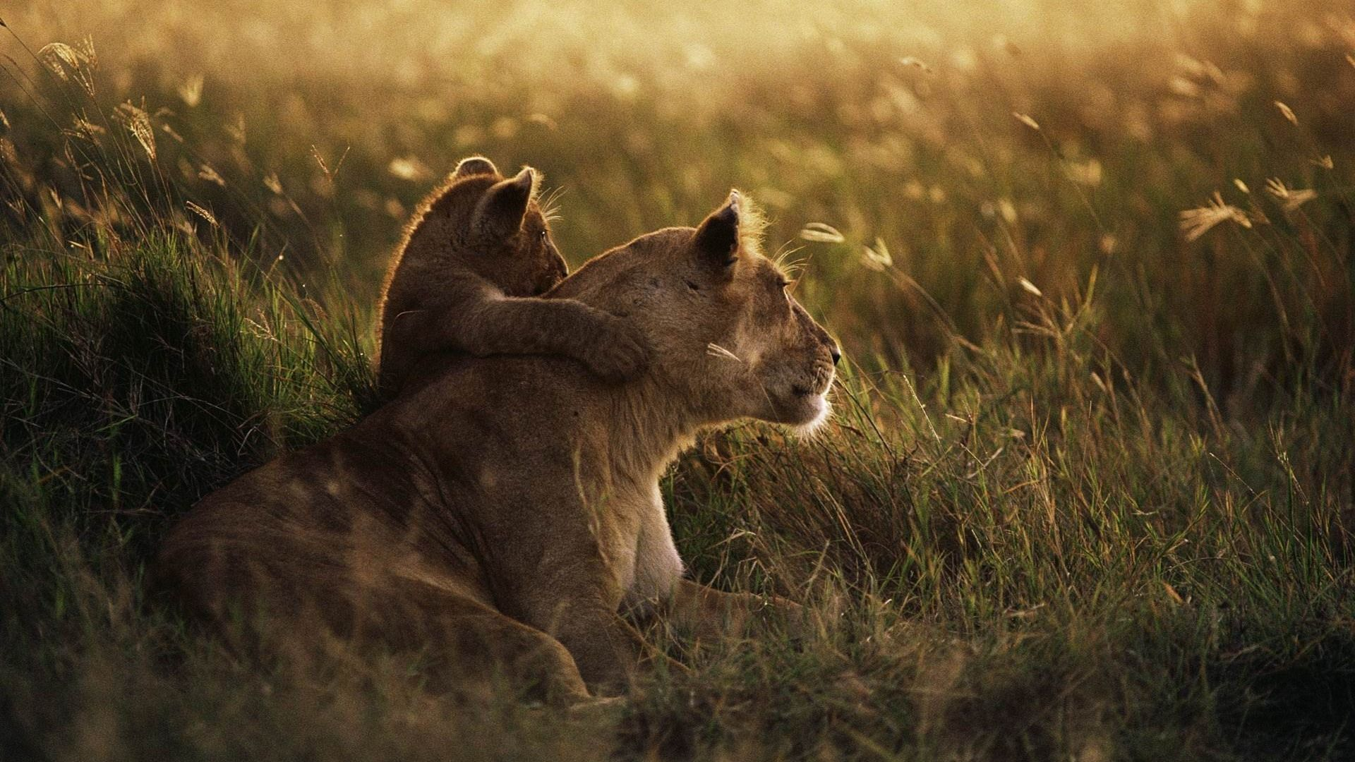 African Animals Wallpapers - Top Free African Animals Backgrounds ...