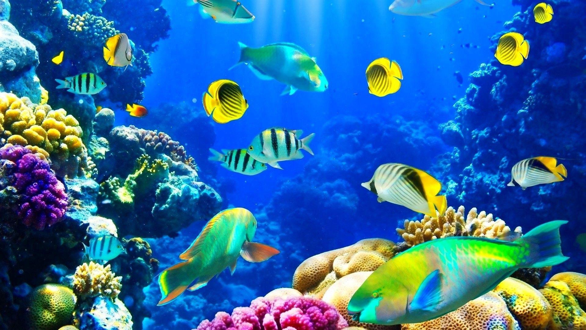 Ocean Life Wallpapers Top Free Ocean Life Backgrounds