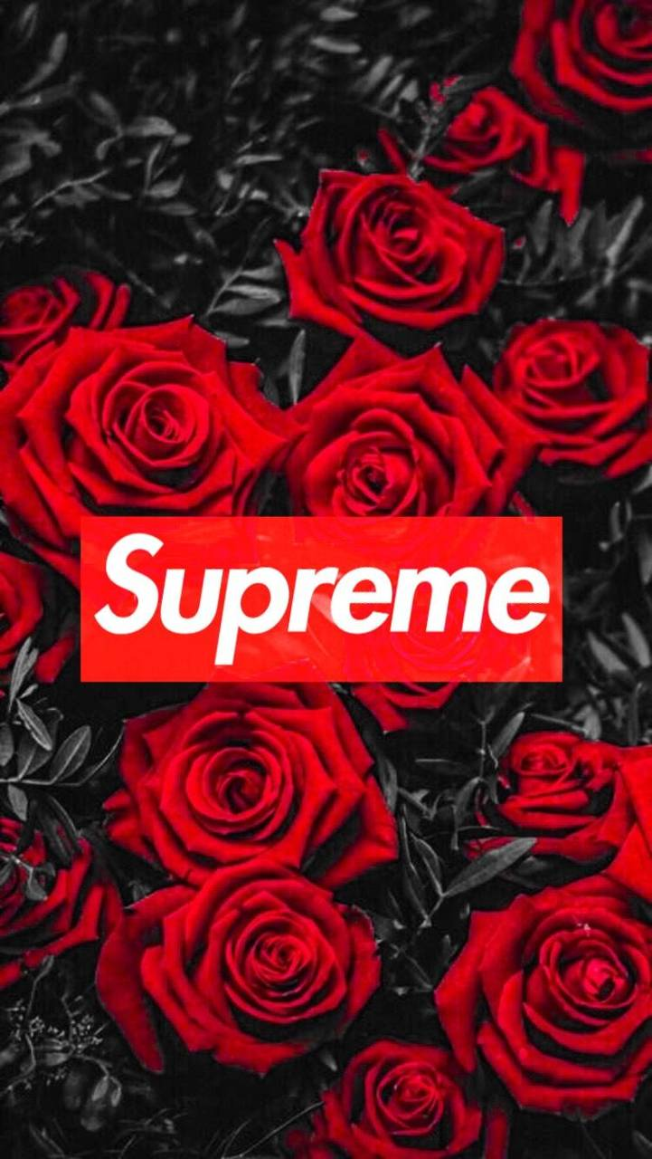 Supreme Rose Wallpapers Top Free Supreme Rose Backgrounds Wallpaperaccess