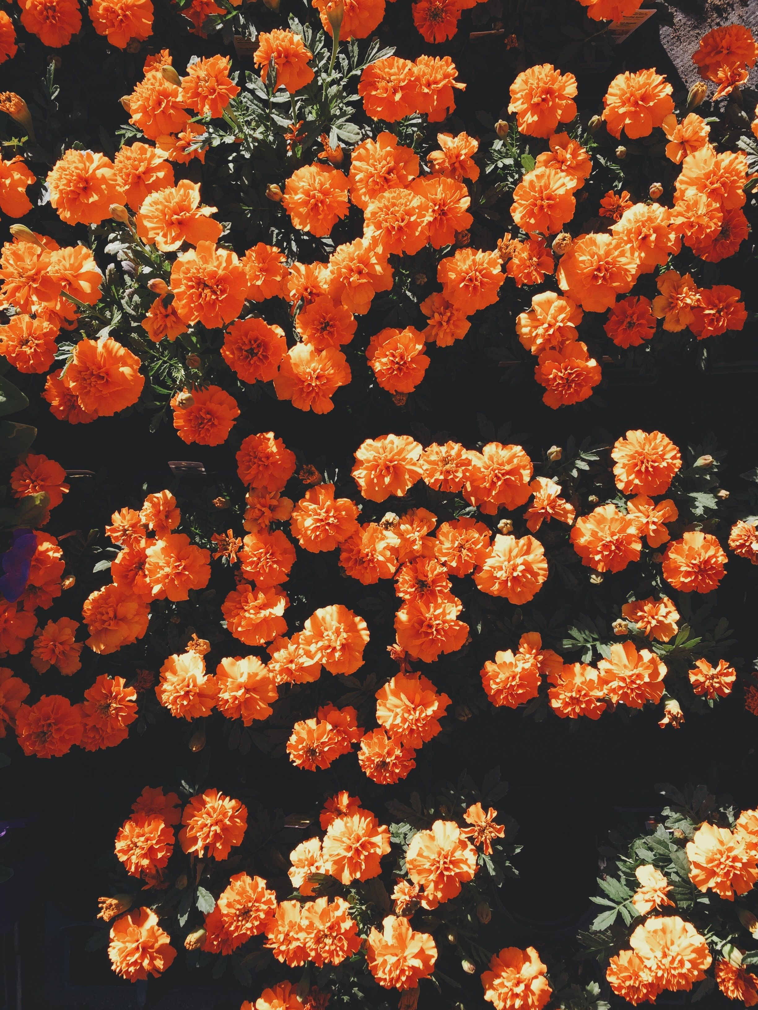 Orange Floral Iphone Wallpapers Top Free Orange Floral Iphone