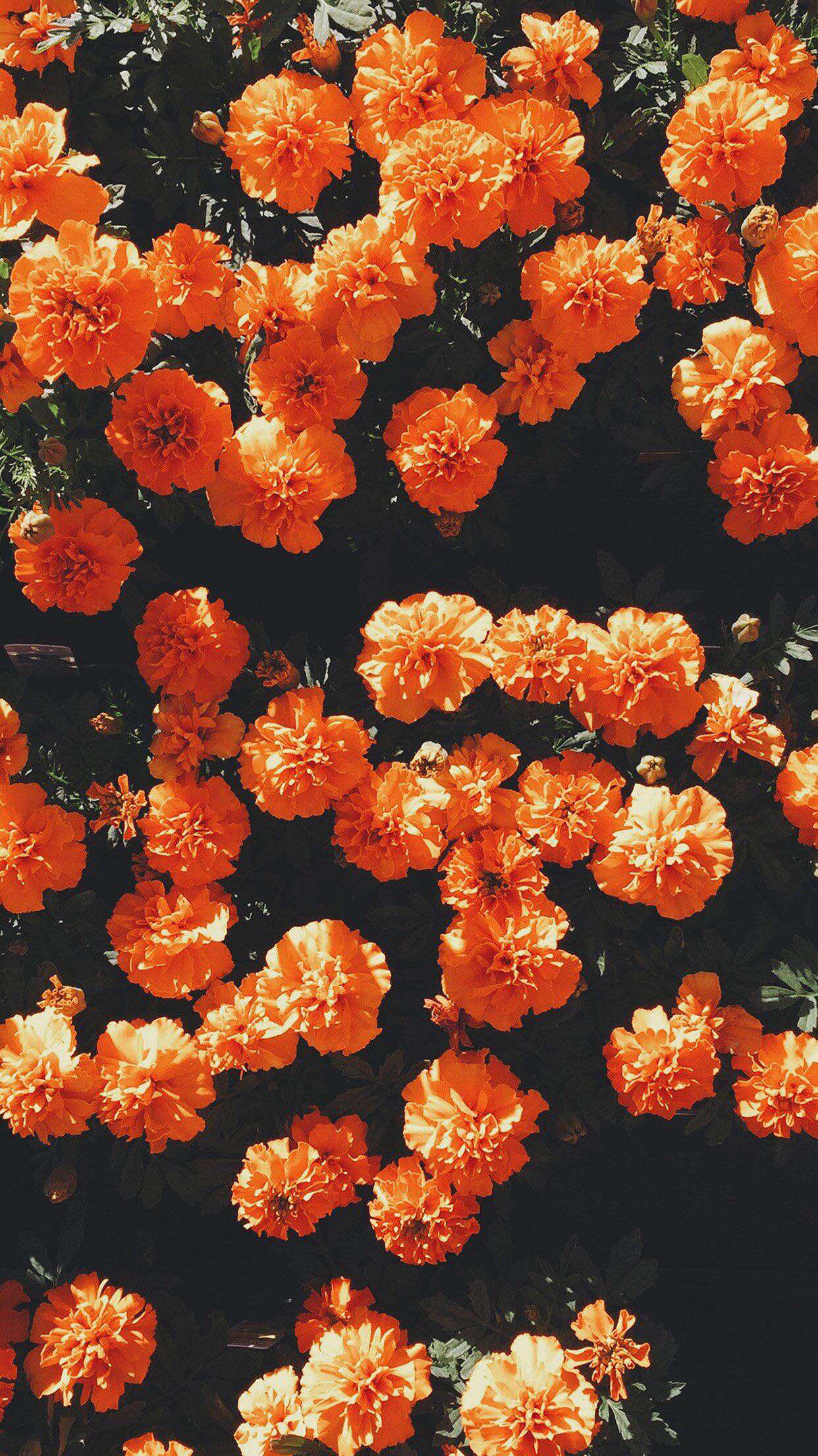 Orange Floral Iphone Wallpapers Top Free Orange Floral Iphone Backgrounds Wallpaperaccess