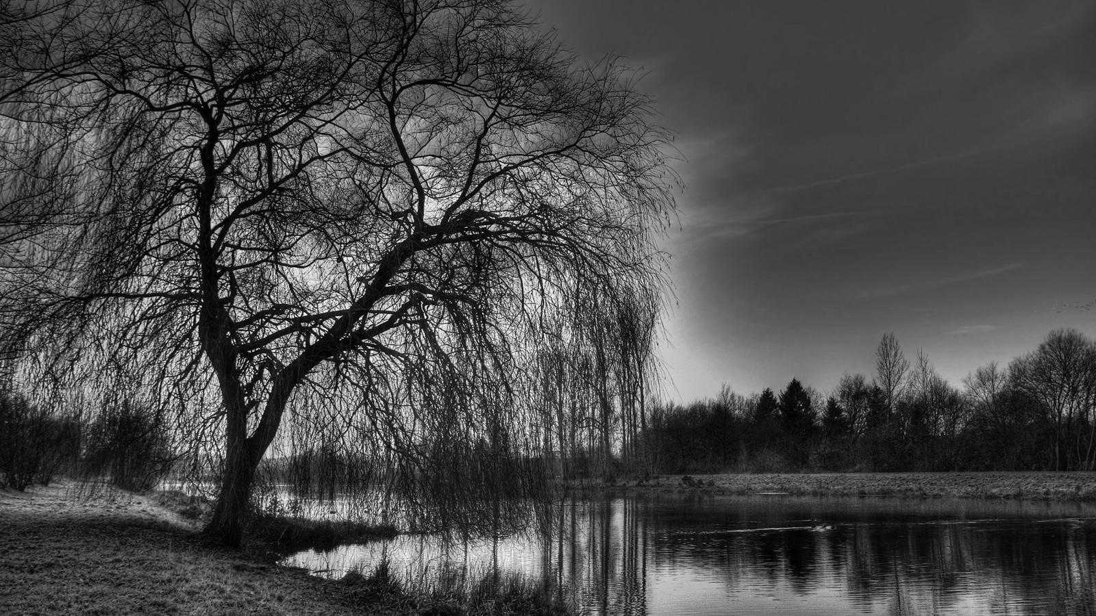 Black And White Nature Wallpapers Top Free Black And White Nature Backgrounds Wallpaperaccess