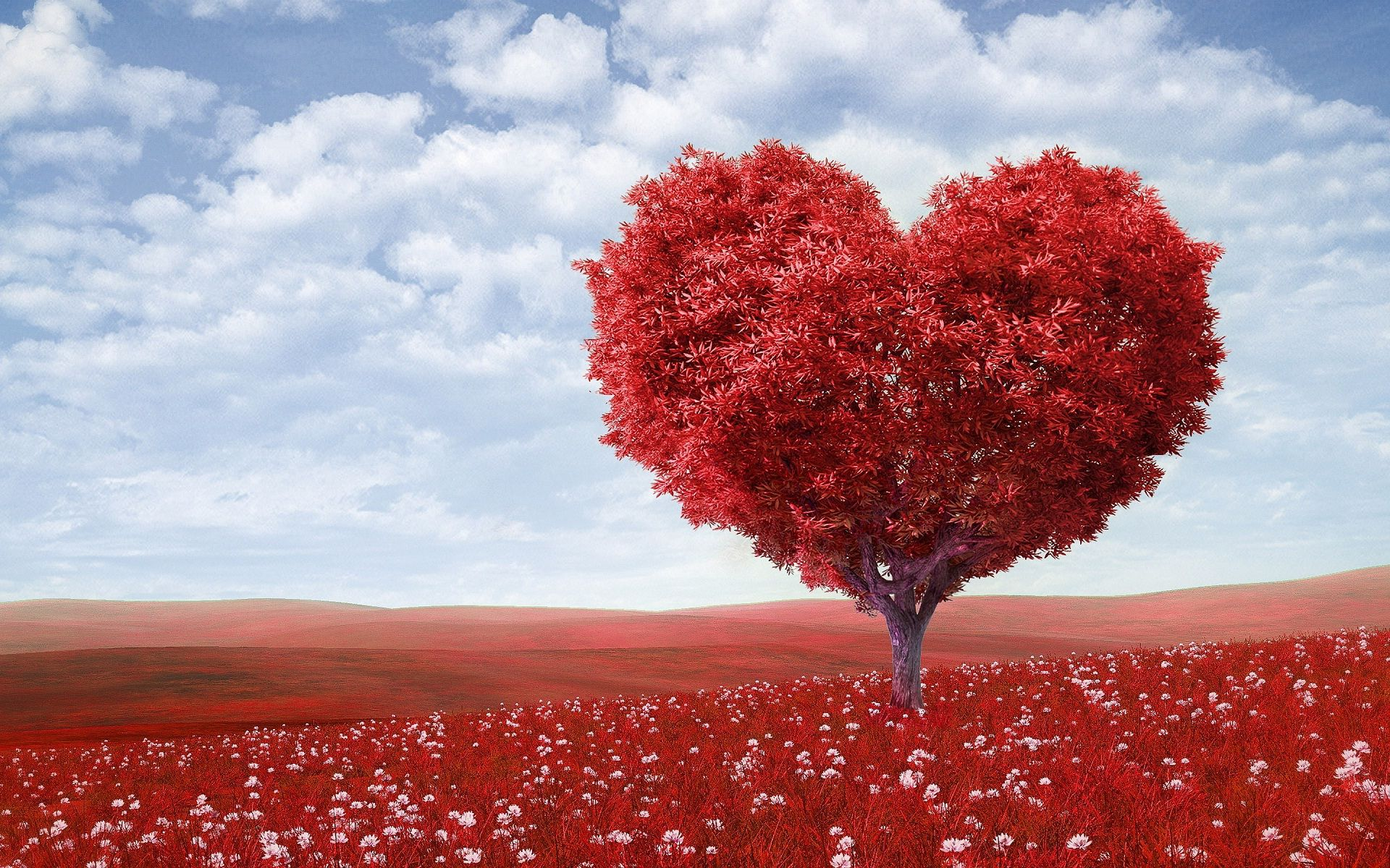Love Shape Wallpapers Top Free Love Shape Backgrounds