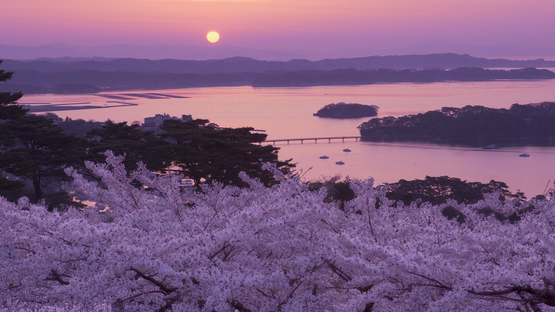 Japan Cherry Blossom Tree Wallpapers - Top Free Japan ...