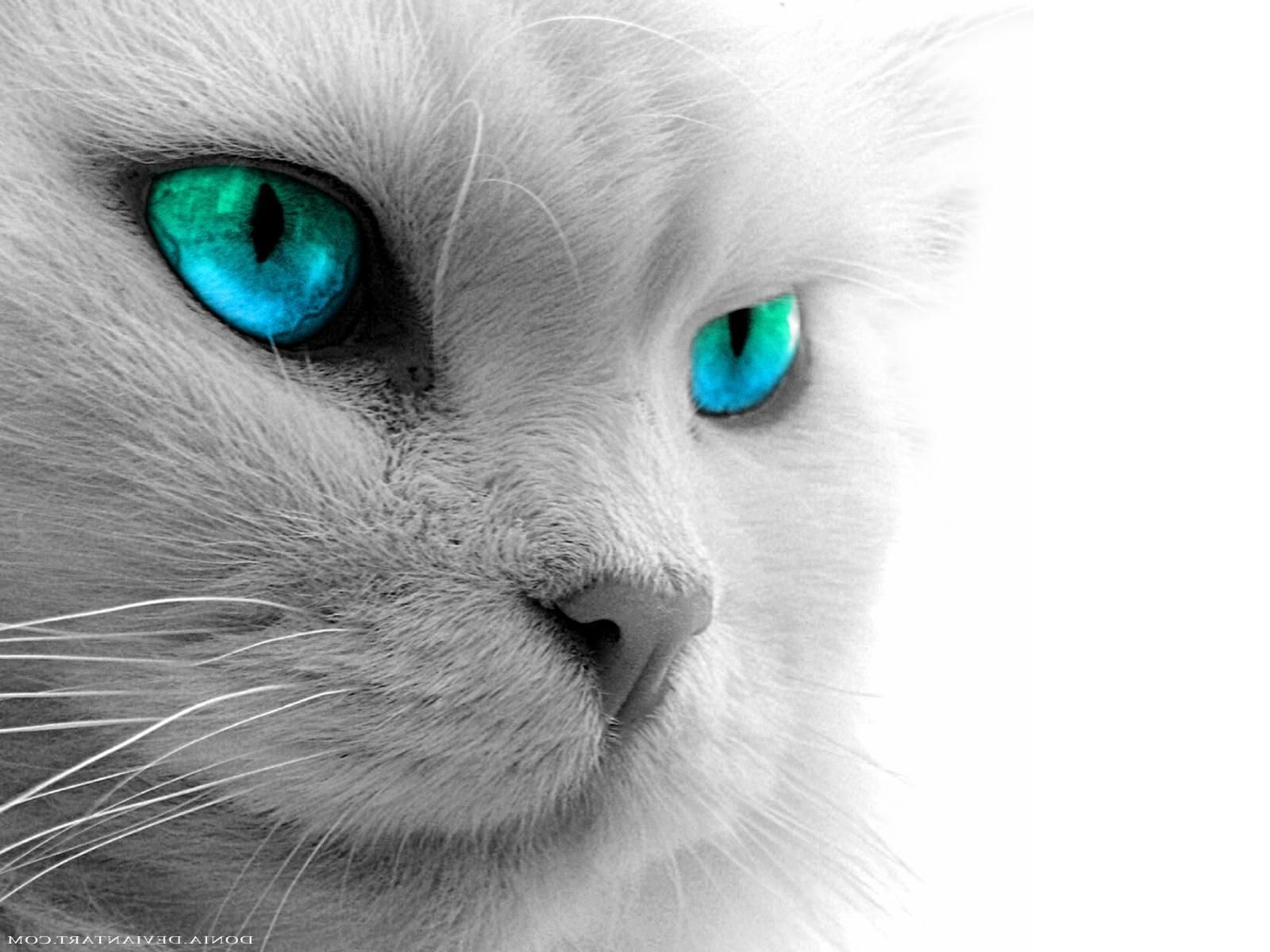 Cat Eyes Wallpapers Top Free Cat Eyes Backgrounds Wallpaperaccess