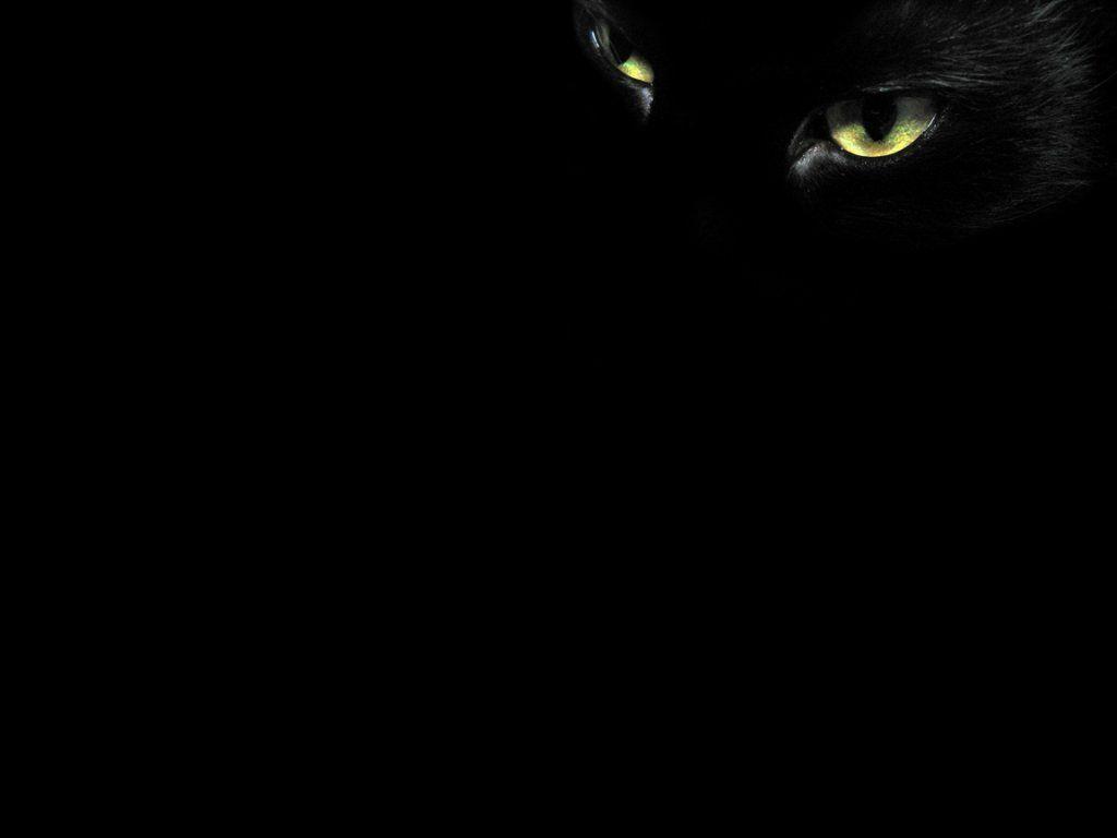 Cat Eyes Wallpapers - Top Free Cat Eyes ...