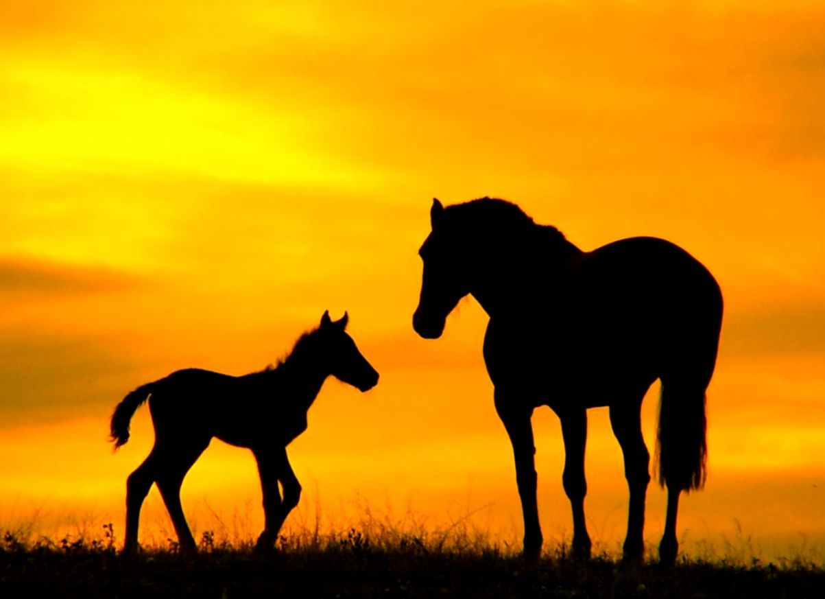 Baby Horse Wallpapers Top Free Baby Horse Backgrounds Wallpaperaccess