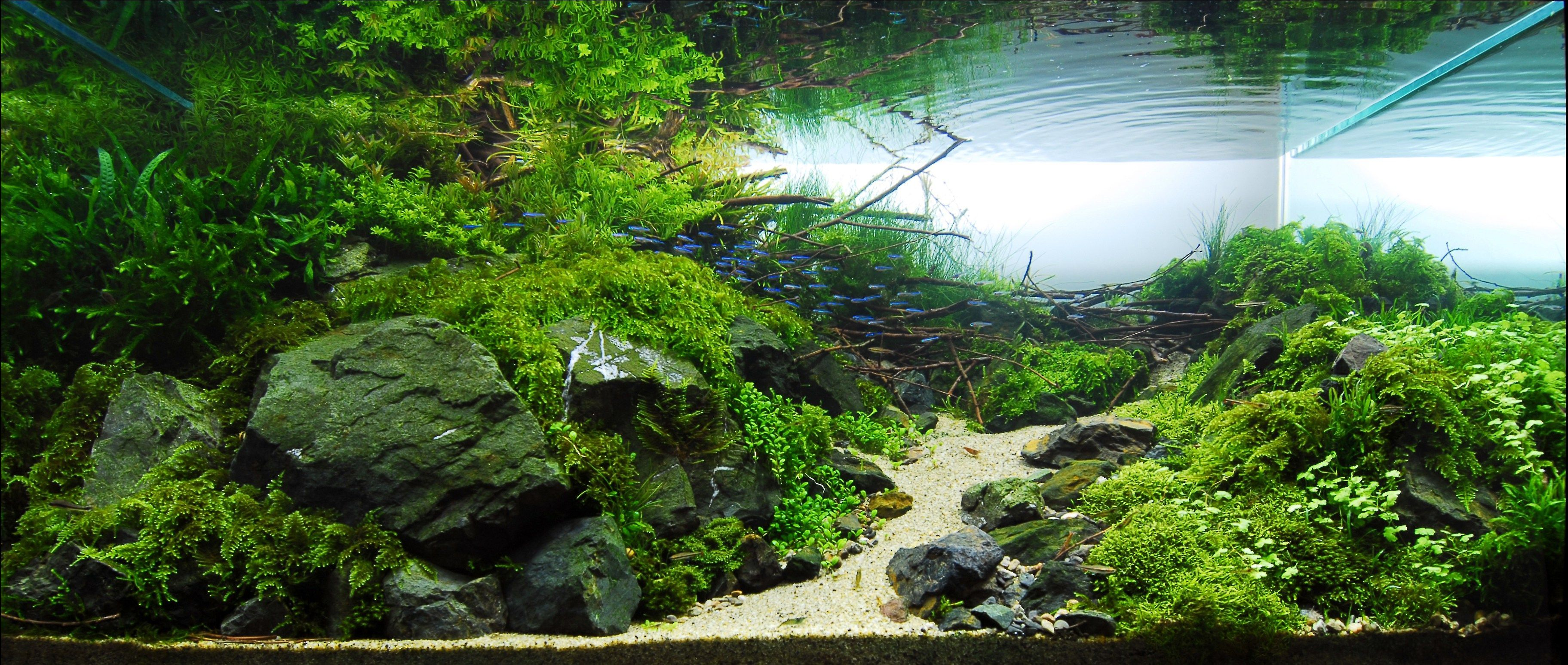 Aquascape Wallpapers Top Free Aquascape Backgrounds Wallpaperaccess