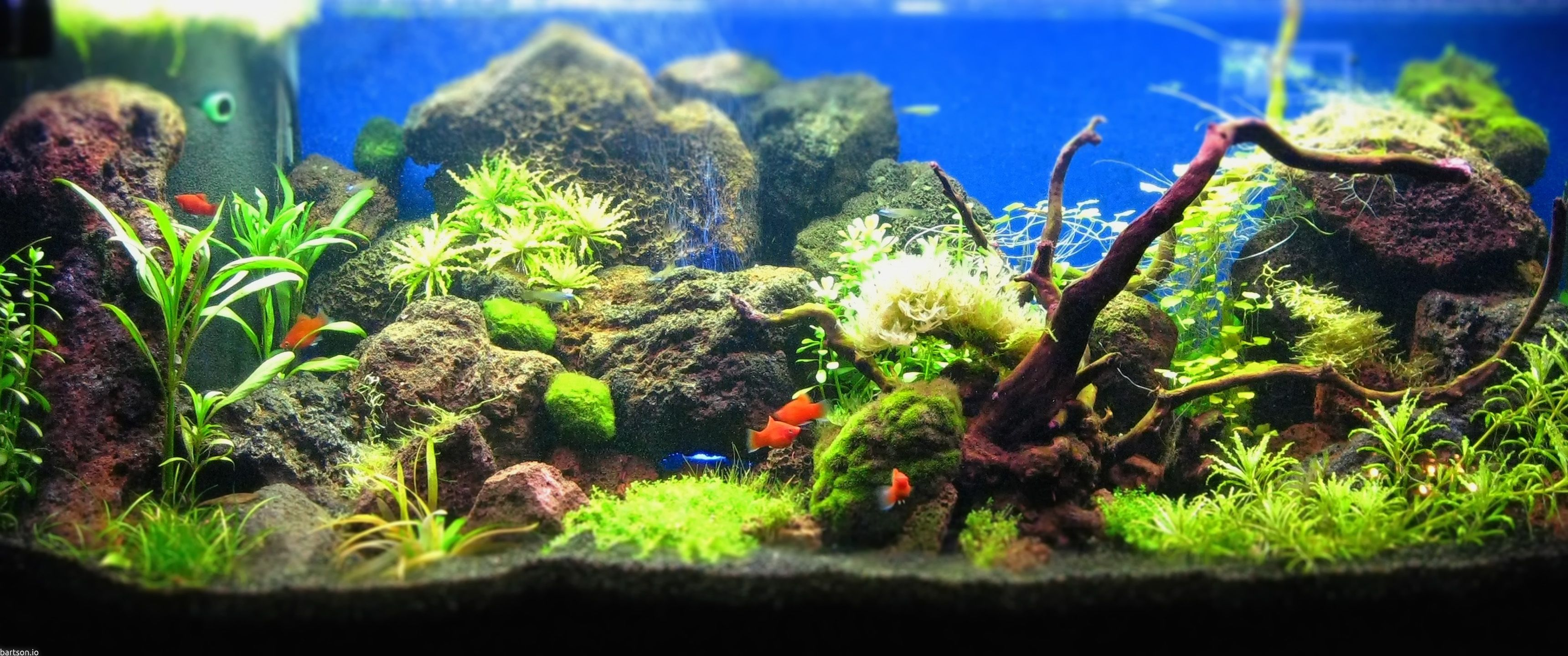 Aquascape Wallpapers Top Free Aquascape Backgrounds Wallpaperaccess