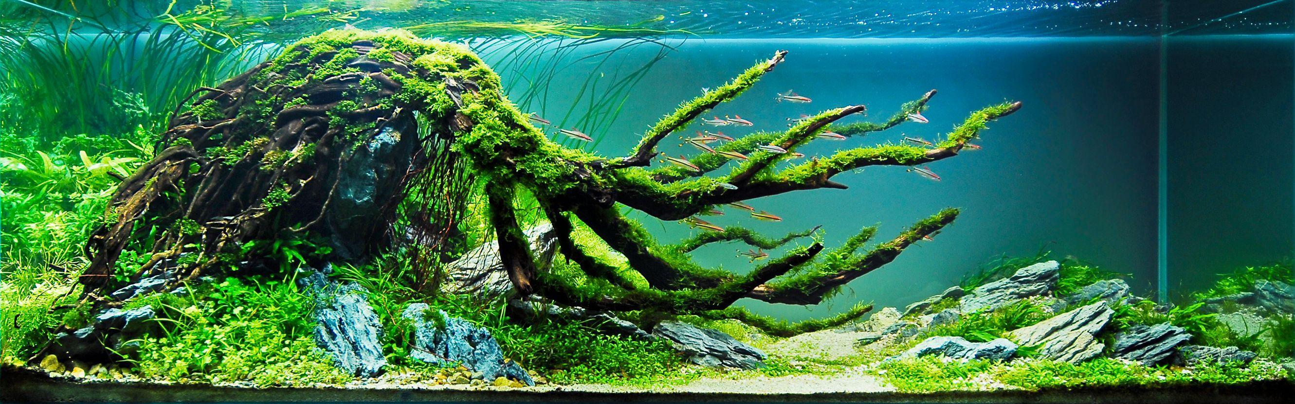 Aquascape Wallpapers - Top Free Aquascape Backgrounds ...