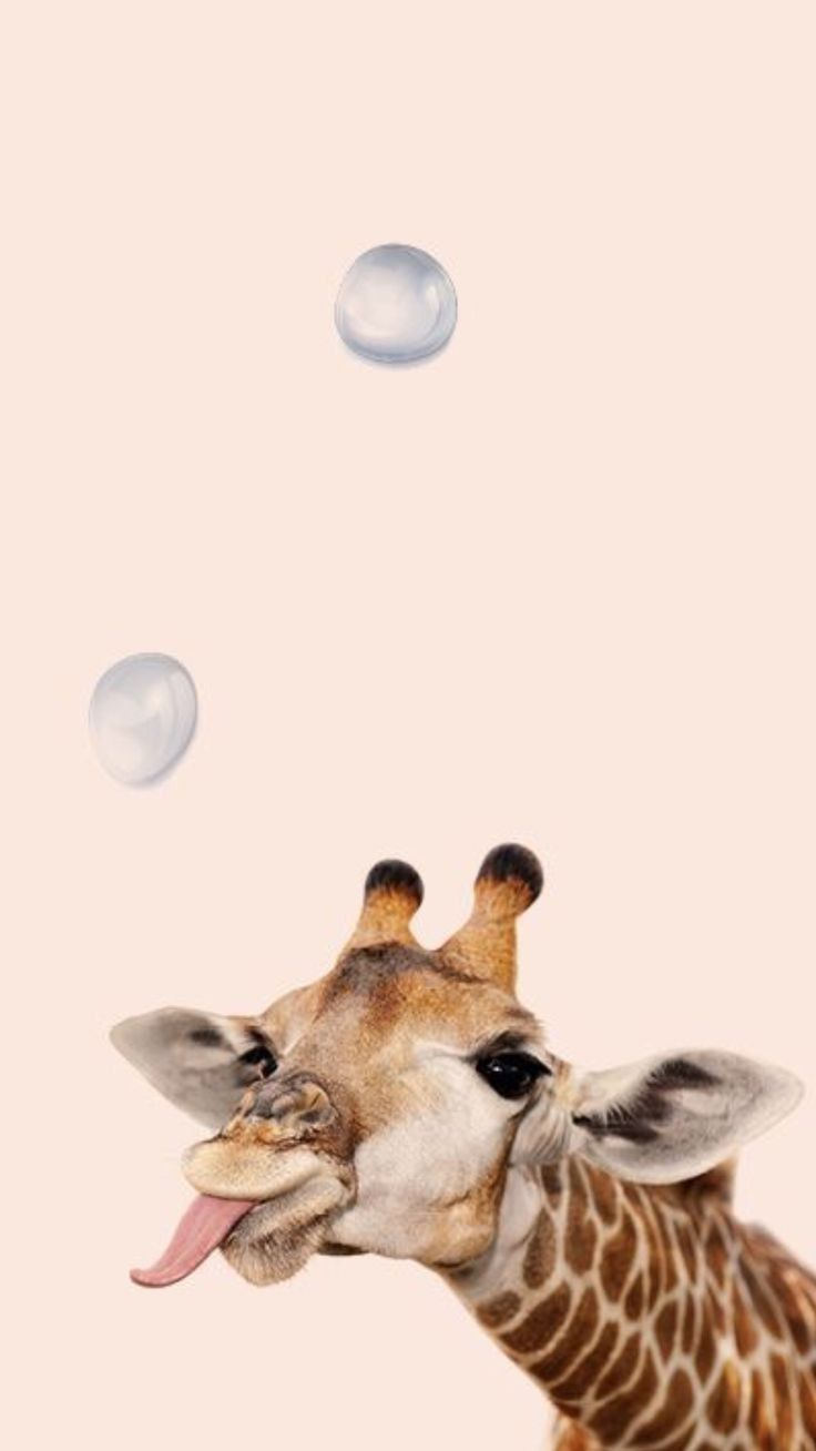 Aesthetic Animals Wallpapers Top Free Aesthetic Animals Backgrounds Wallpaperaccess