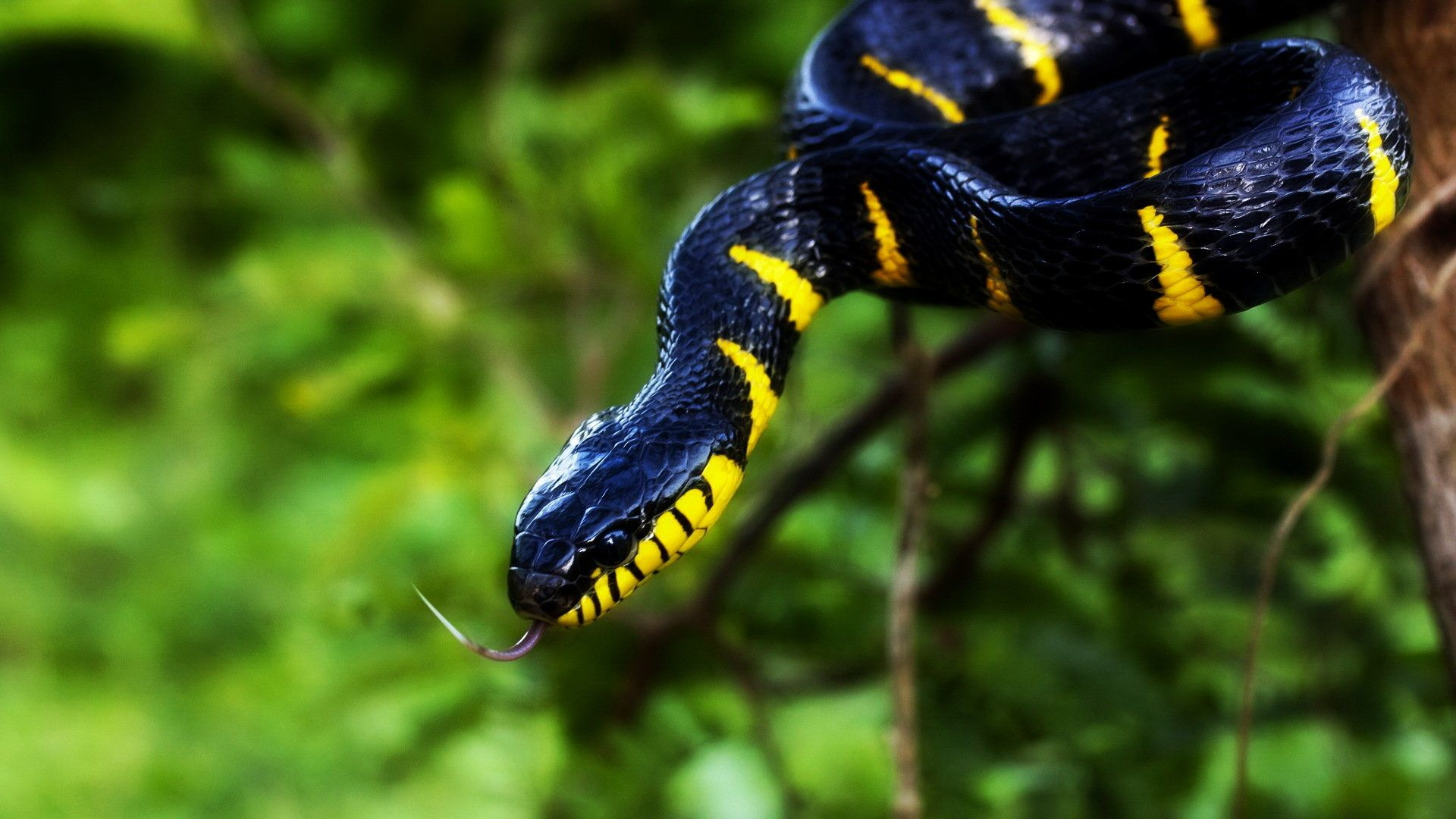 Snake Desktop Wallpapers Top Free Snake Desktop Backgrounds Wallpaperaccess