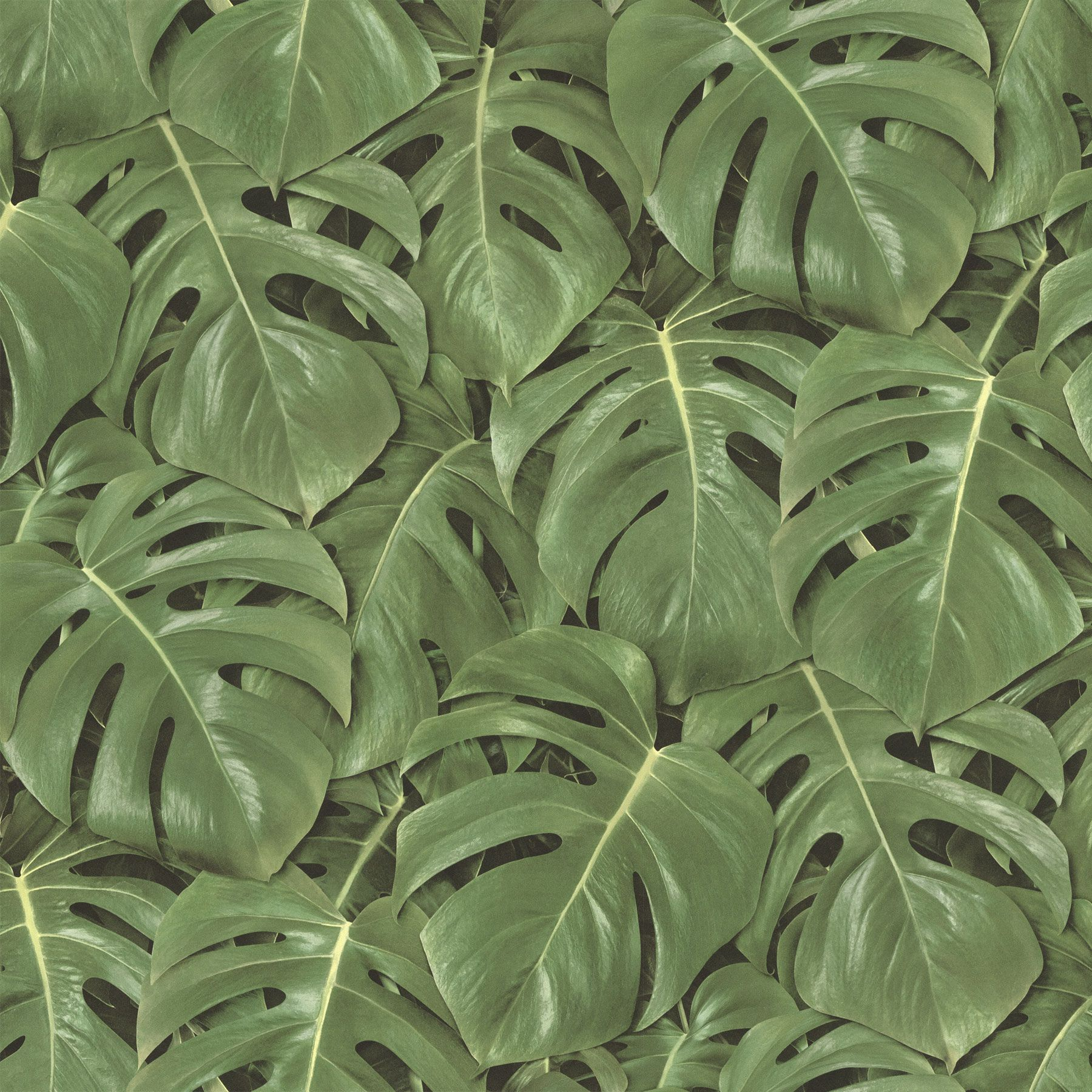 Jungle Leaves Wallpapers Top Free Jungle Leaves Backgrounds Wallpaperaccess Related searches:tropical jungle tropic tropics tropical plants tropical flower tropical flowers tropical leaf tropical fruit tropical plant. jungle leaves wallpapers top free