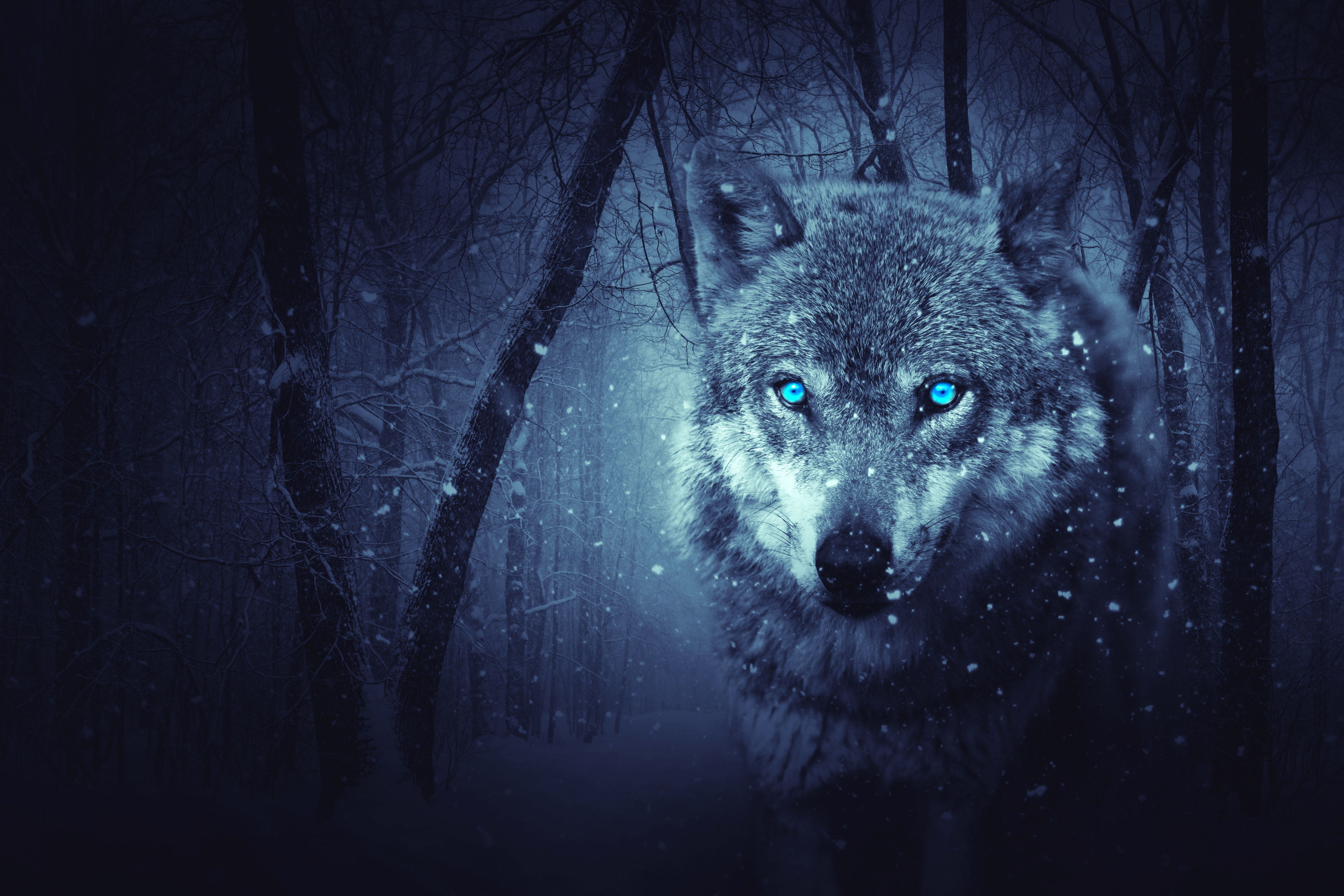 Blue Wolf Eye Wallpapers Top Free Blue Wolf Eye Backgrounds Wallpaperaccess