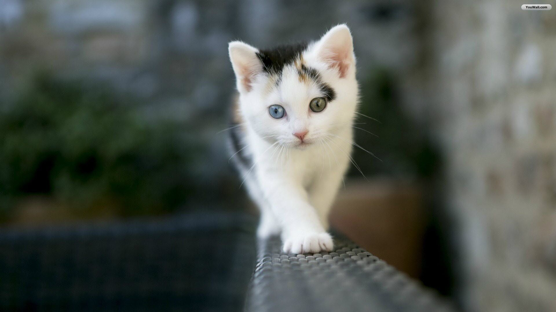 White Cat Wallpapers Top Free White Cat Backgrounds Wallpaperaccess