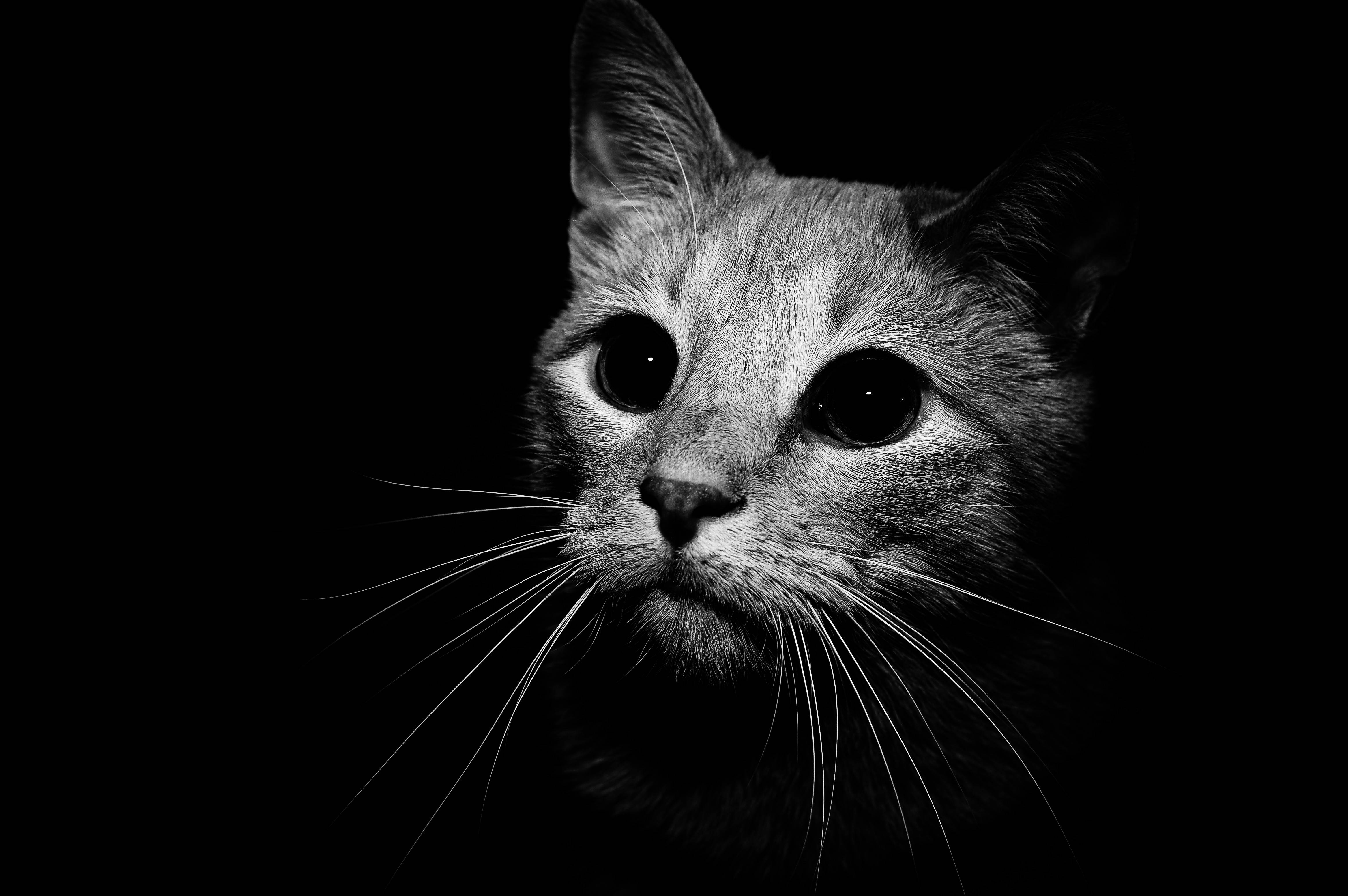 Black And White Kitten Wallpapers Top Free Black And White Kitten Backgrounds Wallpaperaccess