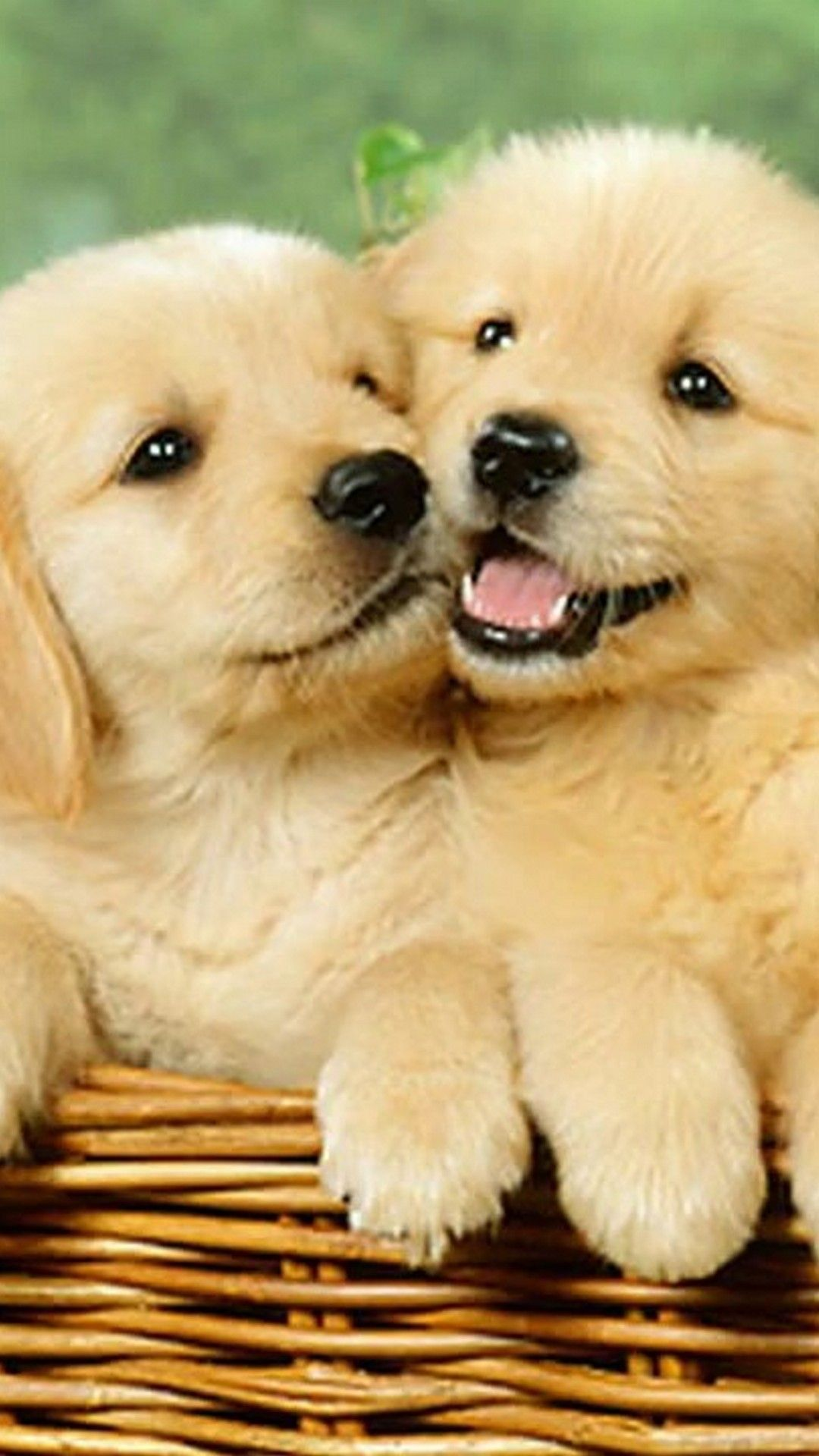 Cute Puppy Iphone Wallpapers Top Free Cute Puppy Iphone Backgrounds Wallpaperaccess
