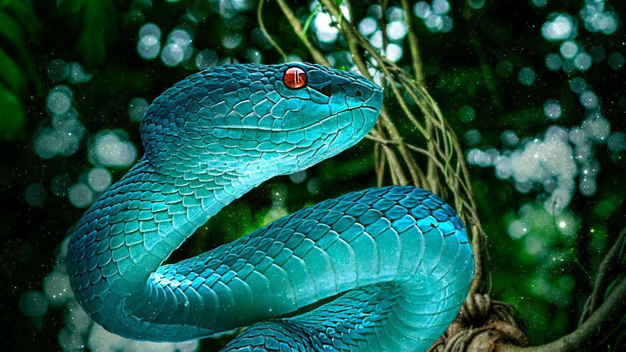 4k Snake Wallpapers Top Free 4k Snake Backgrounds Wallpaperaccess