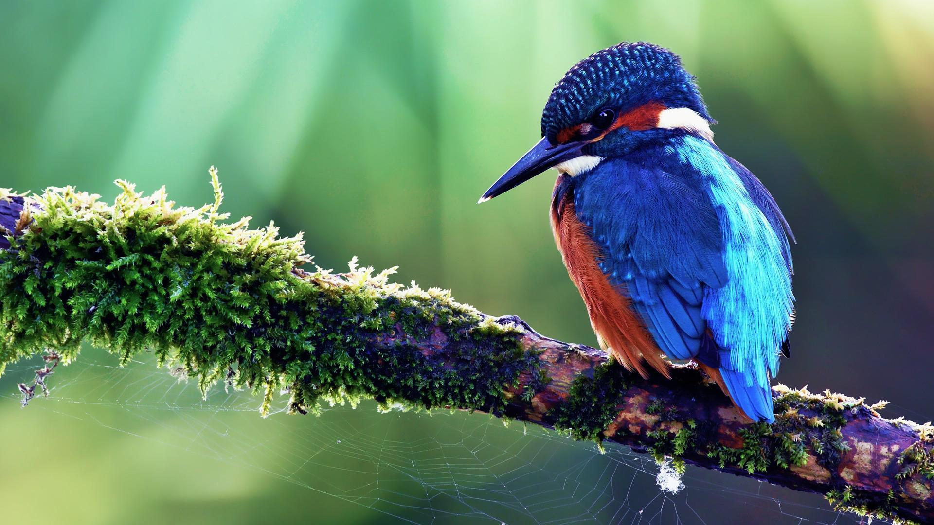 Kingfisher Wallpapers Top Free Kingfisher Backgrounds Wallpaperaccess