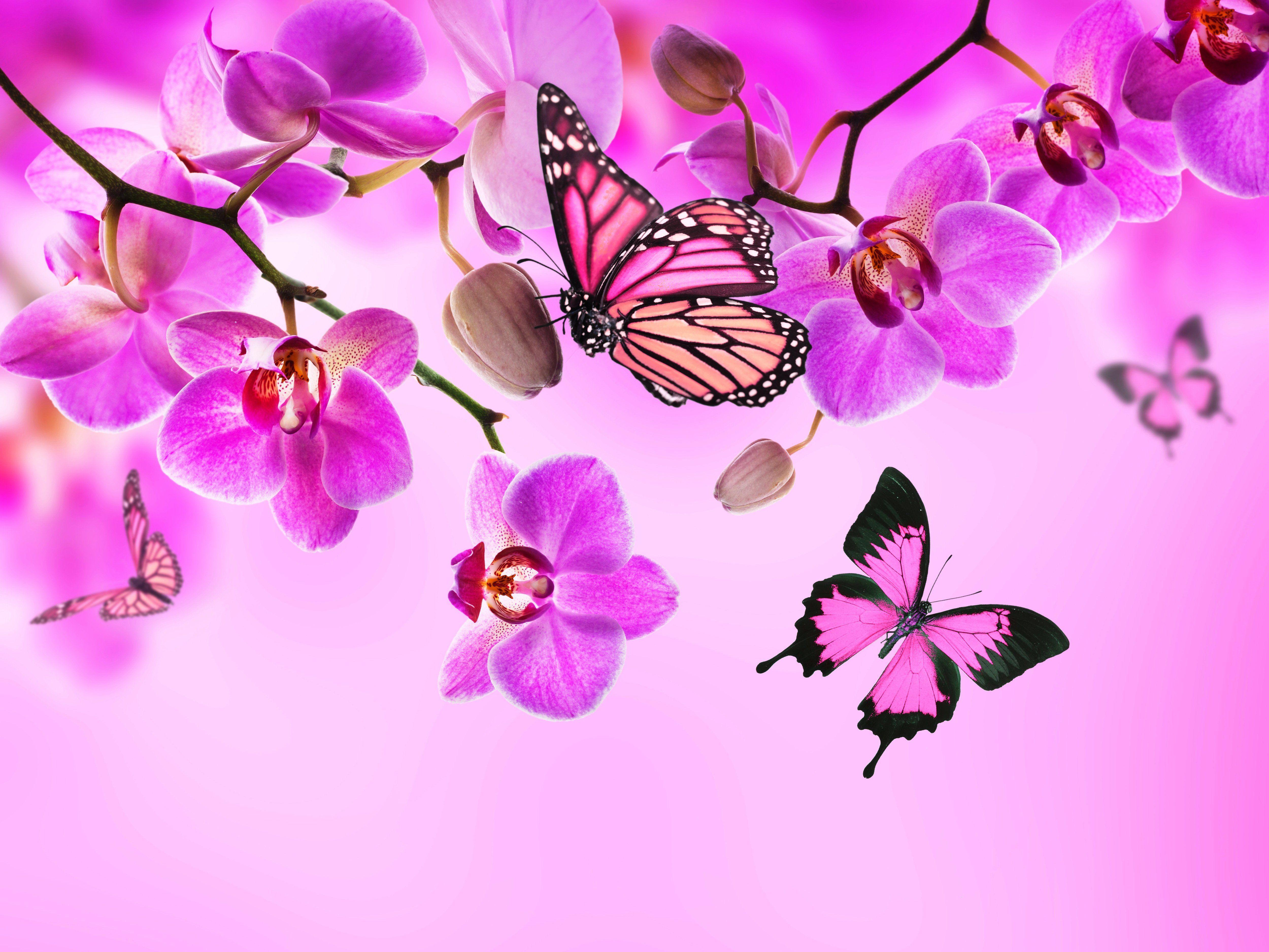 Pink Butterfly Desktop Wallpapers Top Free Pink Butterfly Desktop Backgrounds Wallpaperaccess wallpaperaccess
