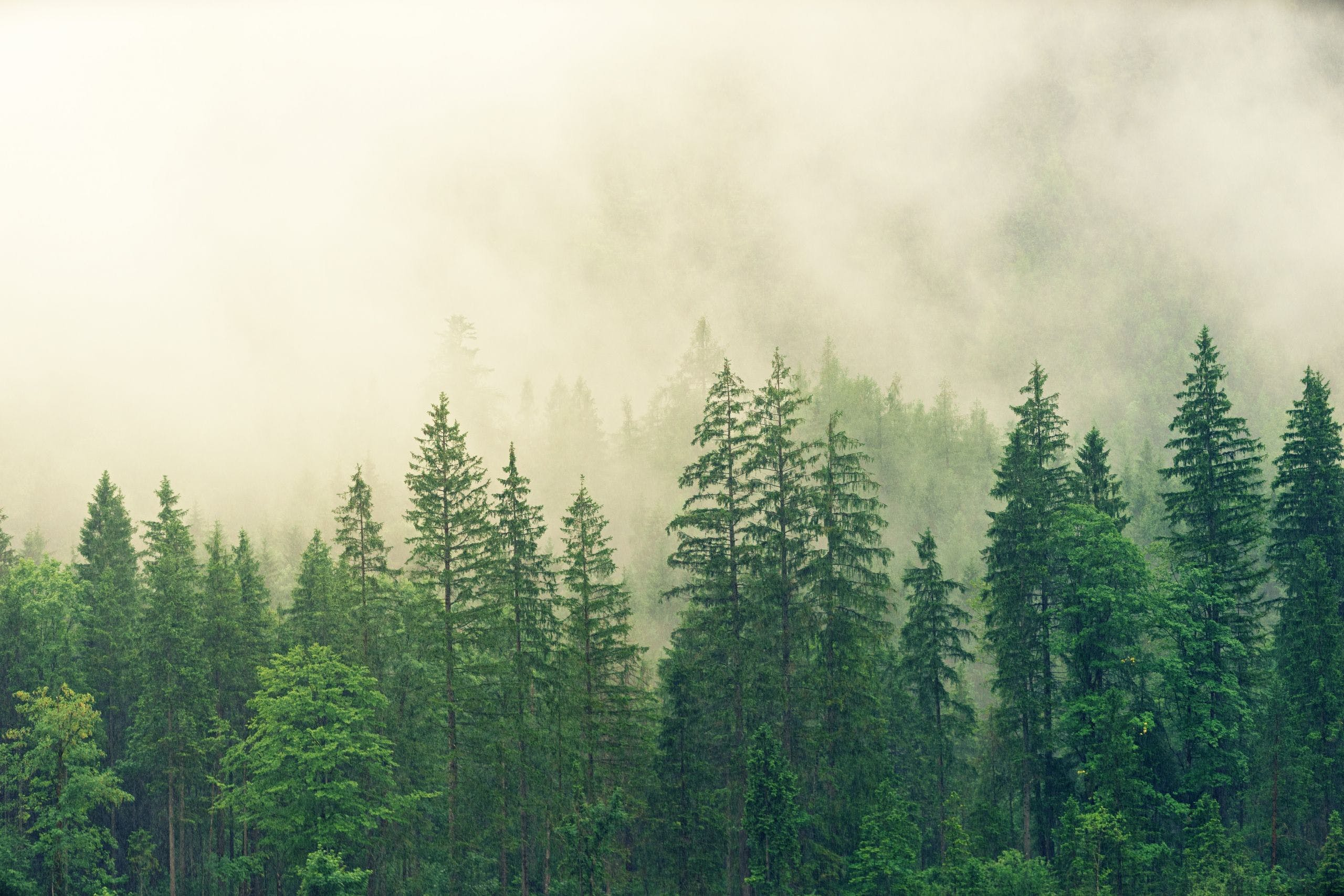 The Forest Wallpapers Top Free The Forest Backgrounds Wallpaperaccess