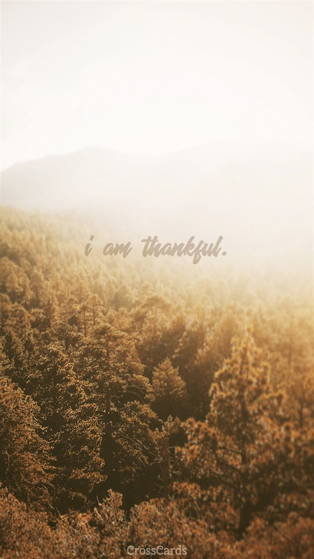Thankful Wallpapers Top Free Thankful Backgrounds Wallpaperaccess